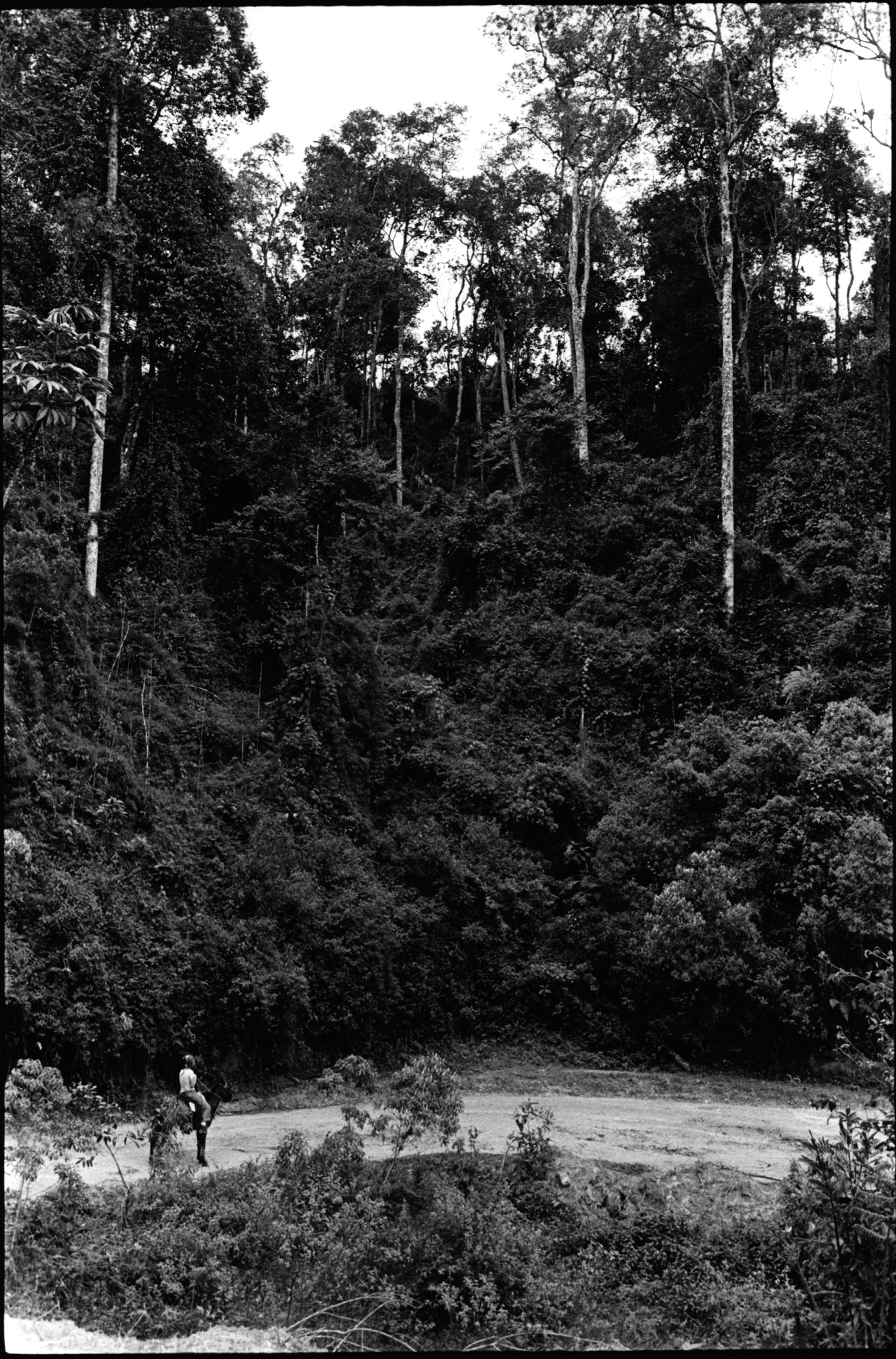 Mule rider trees.jpg