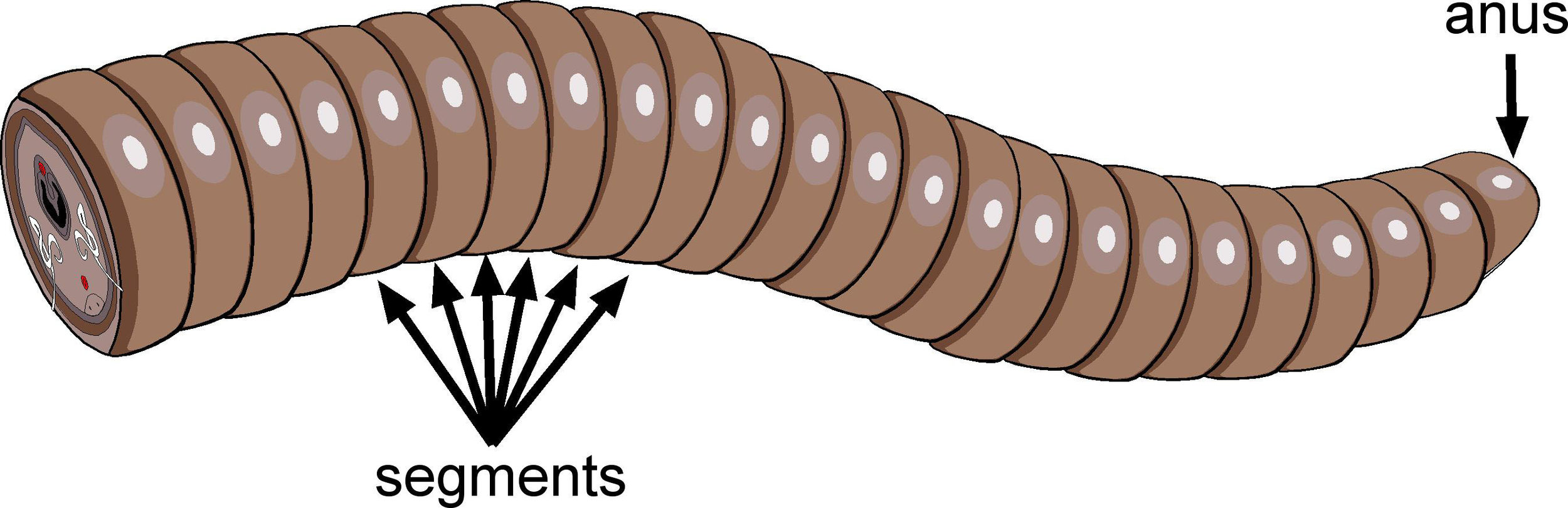worm butt with words.jpg