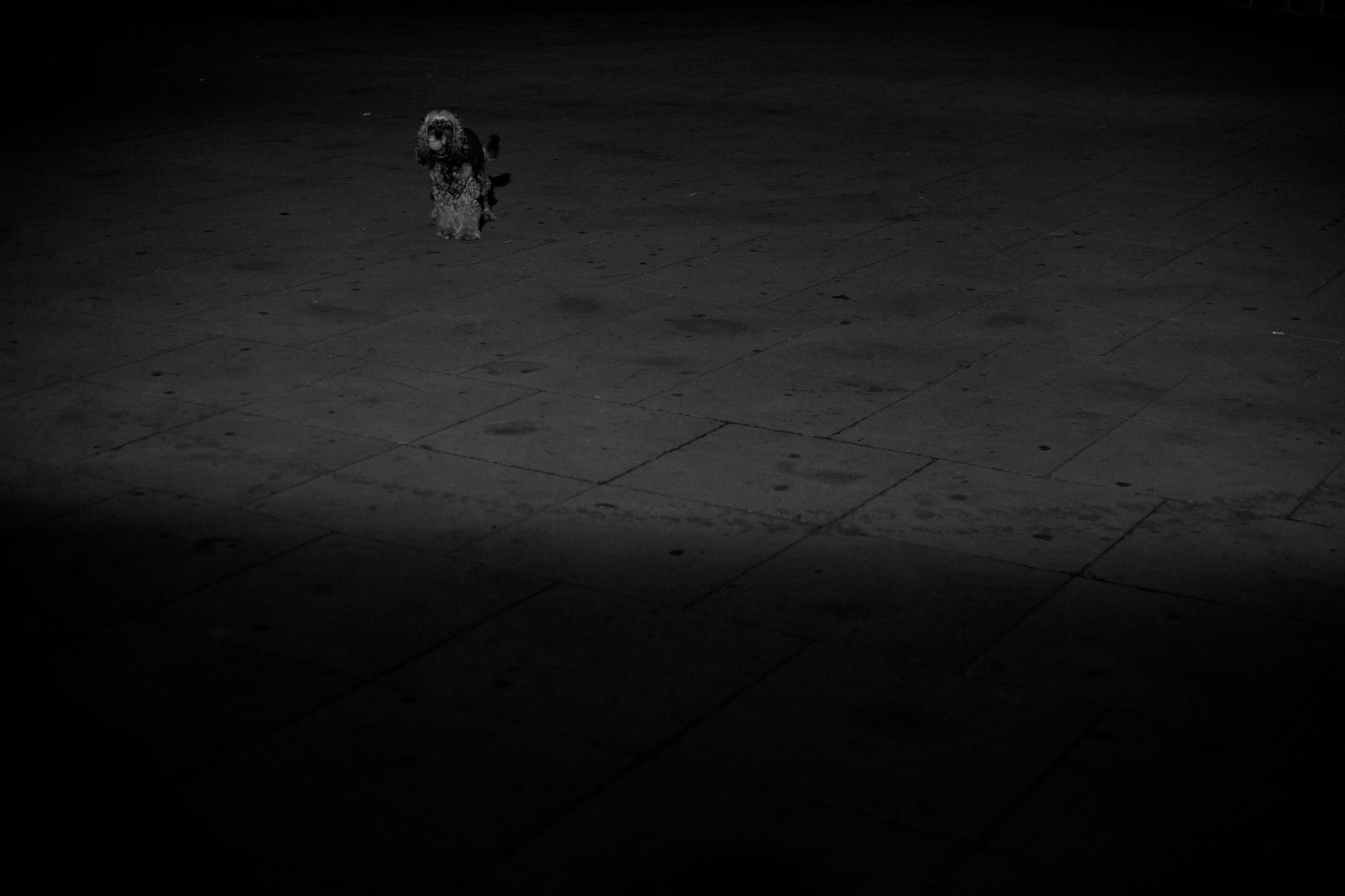 Chacon Images_Barcelona_Street_WEB_-8988.jpg