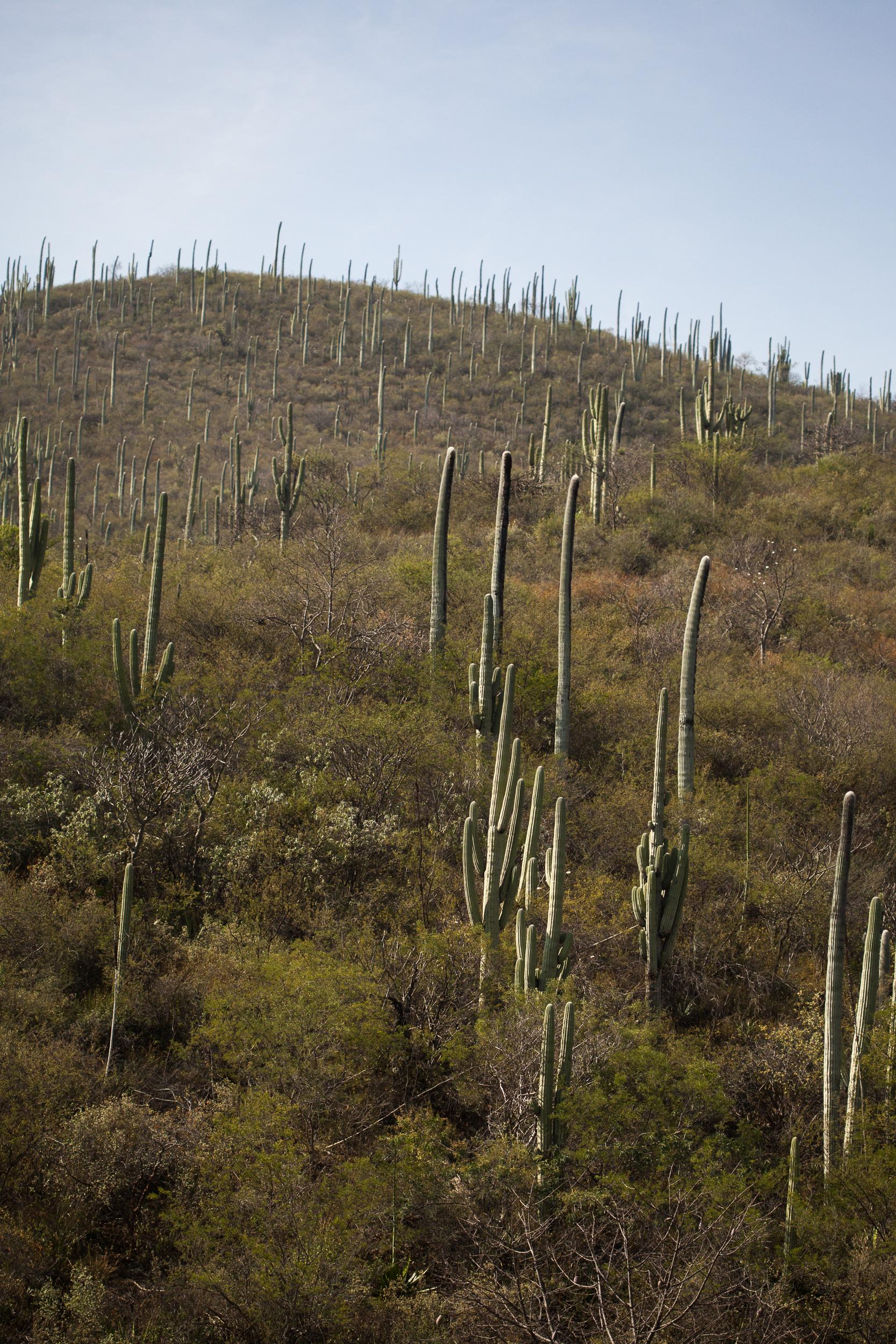 Chacon Images_Oaxaca_Travel_WEB_-1748.jpg