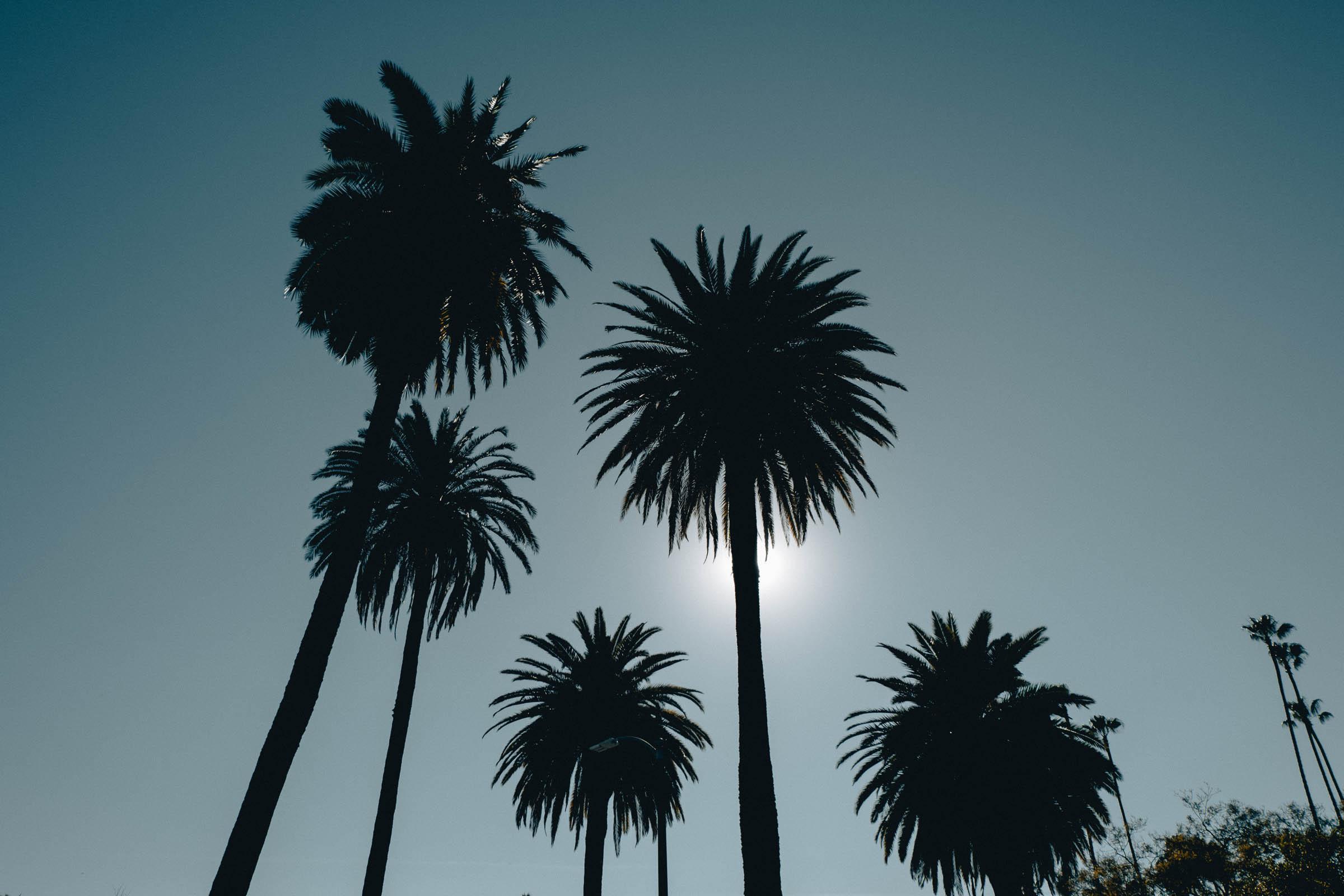 Chacon Images_LA_Web-49.jpg