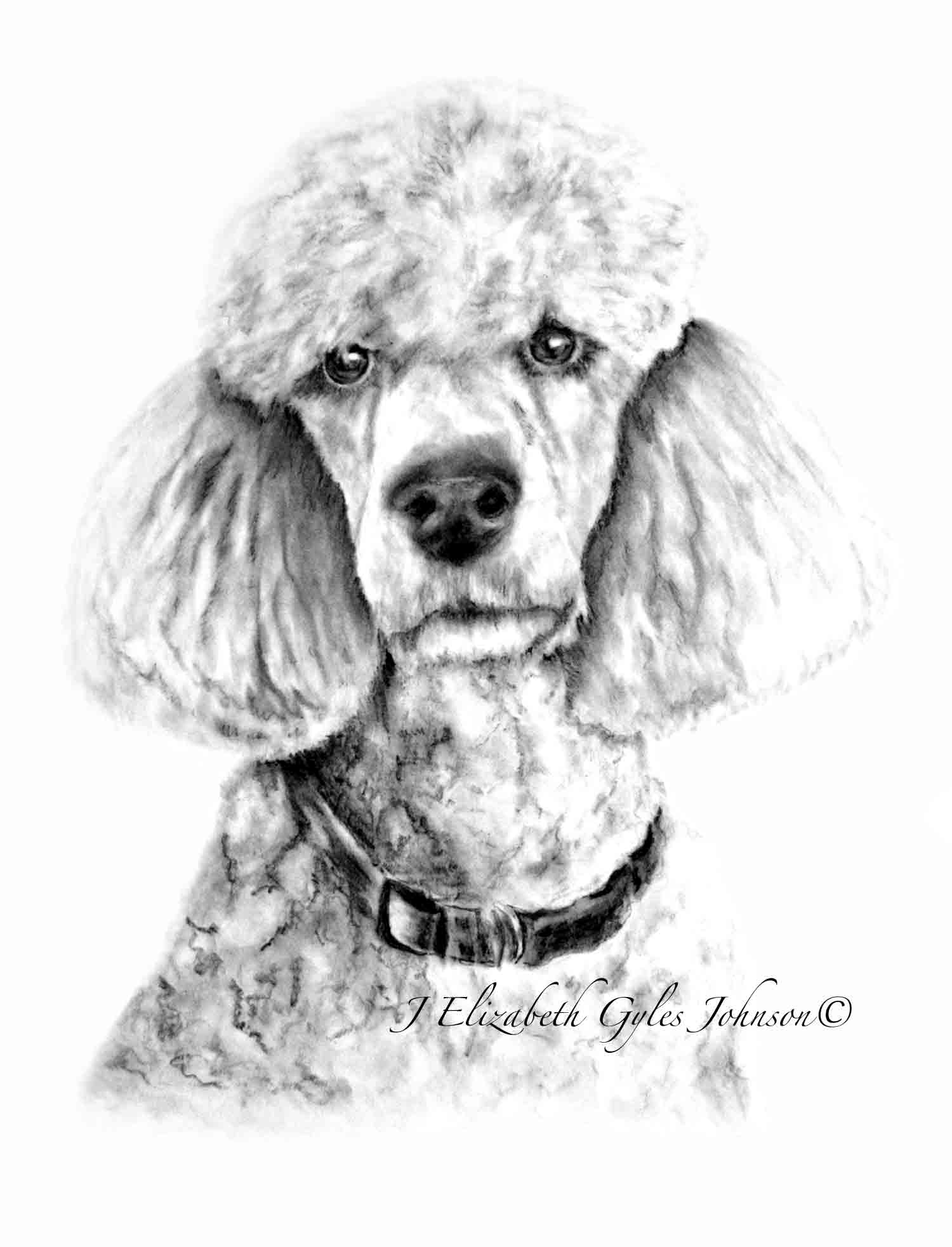 Chopin Poodle