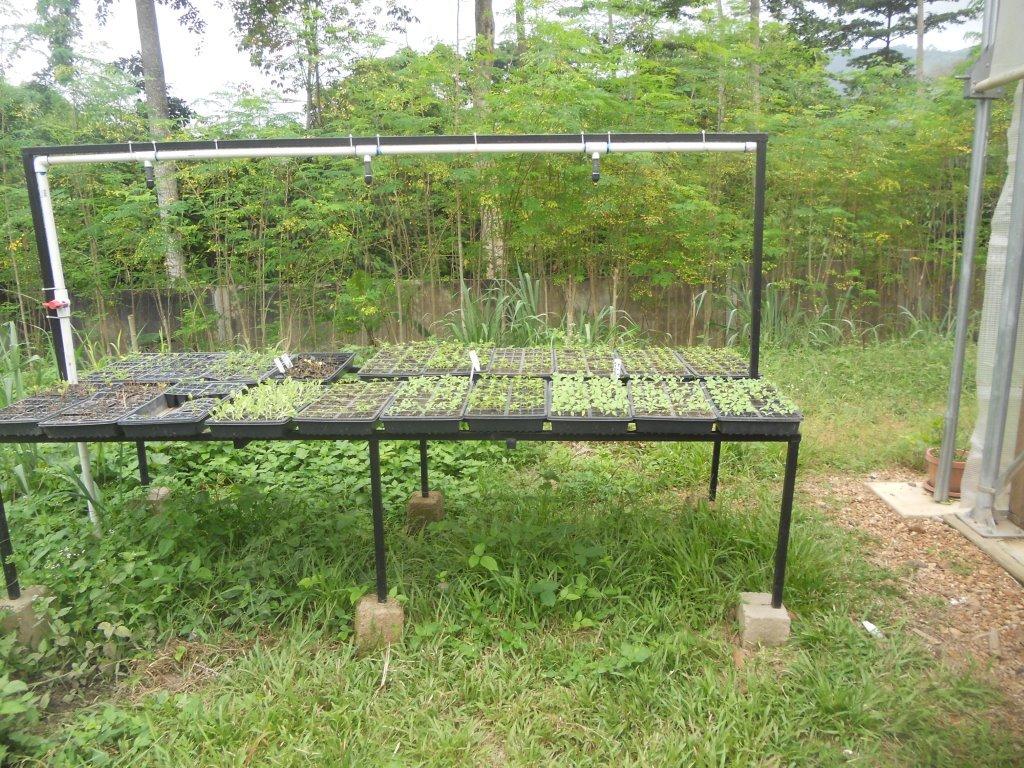 using+the+seedling+table.jpg