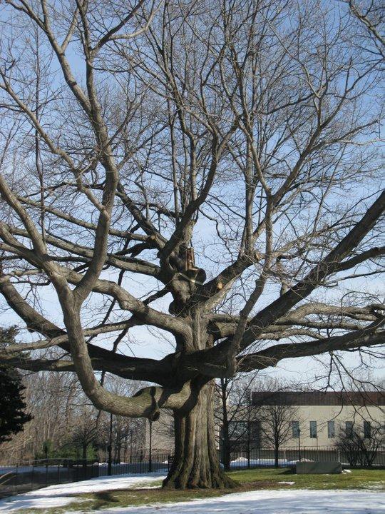 Winter Trees2.jpg