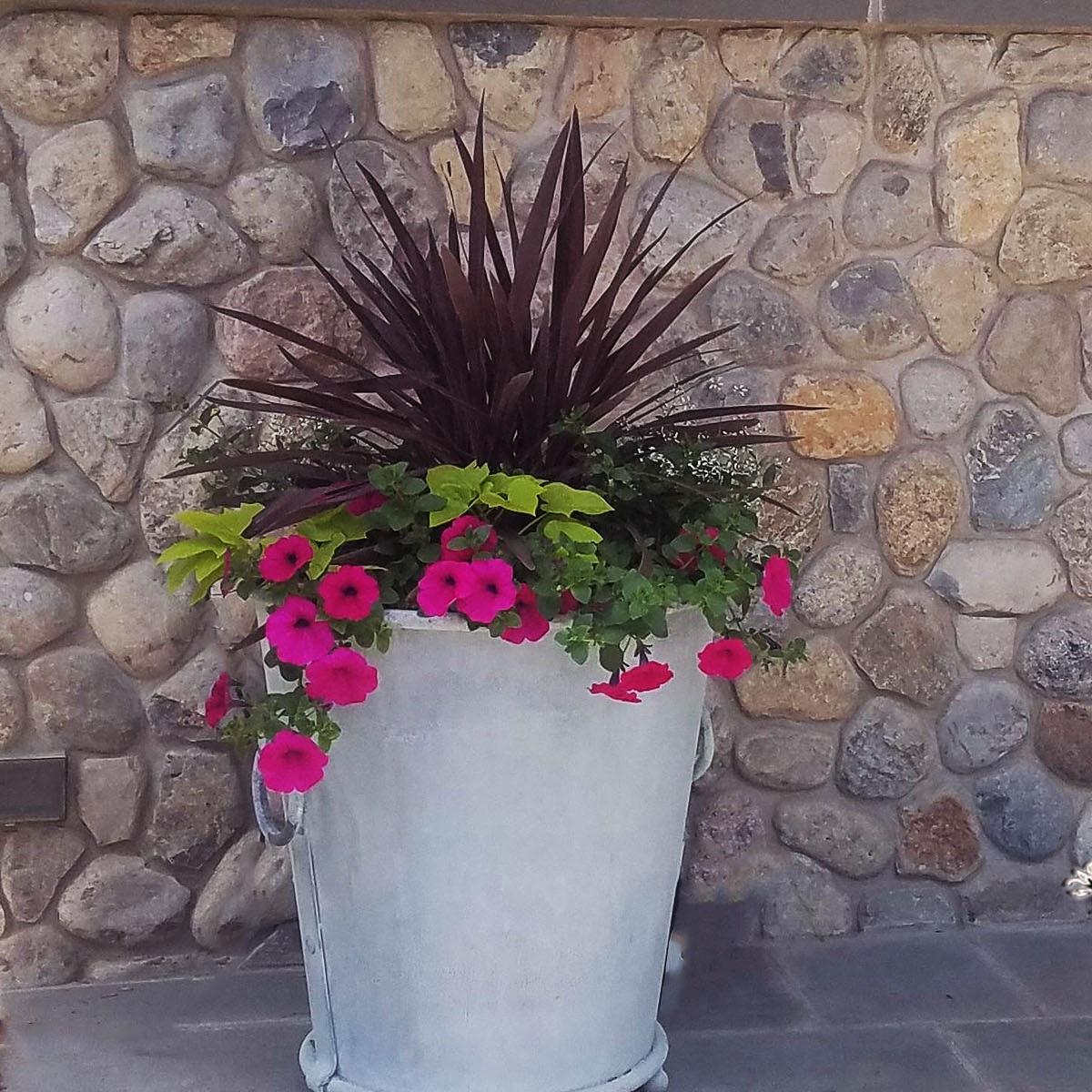 Garden Beds & Horticultural Care