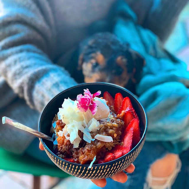 It's Friday babes, bowl date day! 🍓🐶 how cute is our new baby Sheba?! 😍🥰 //mention this ad for a free coffee w/ any bowl purchase // ☕️ Happy Friday!