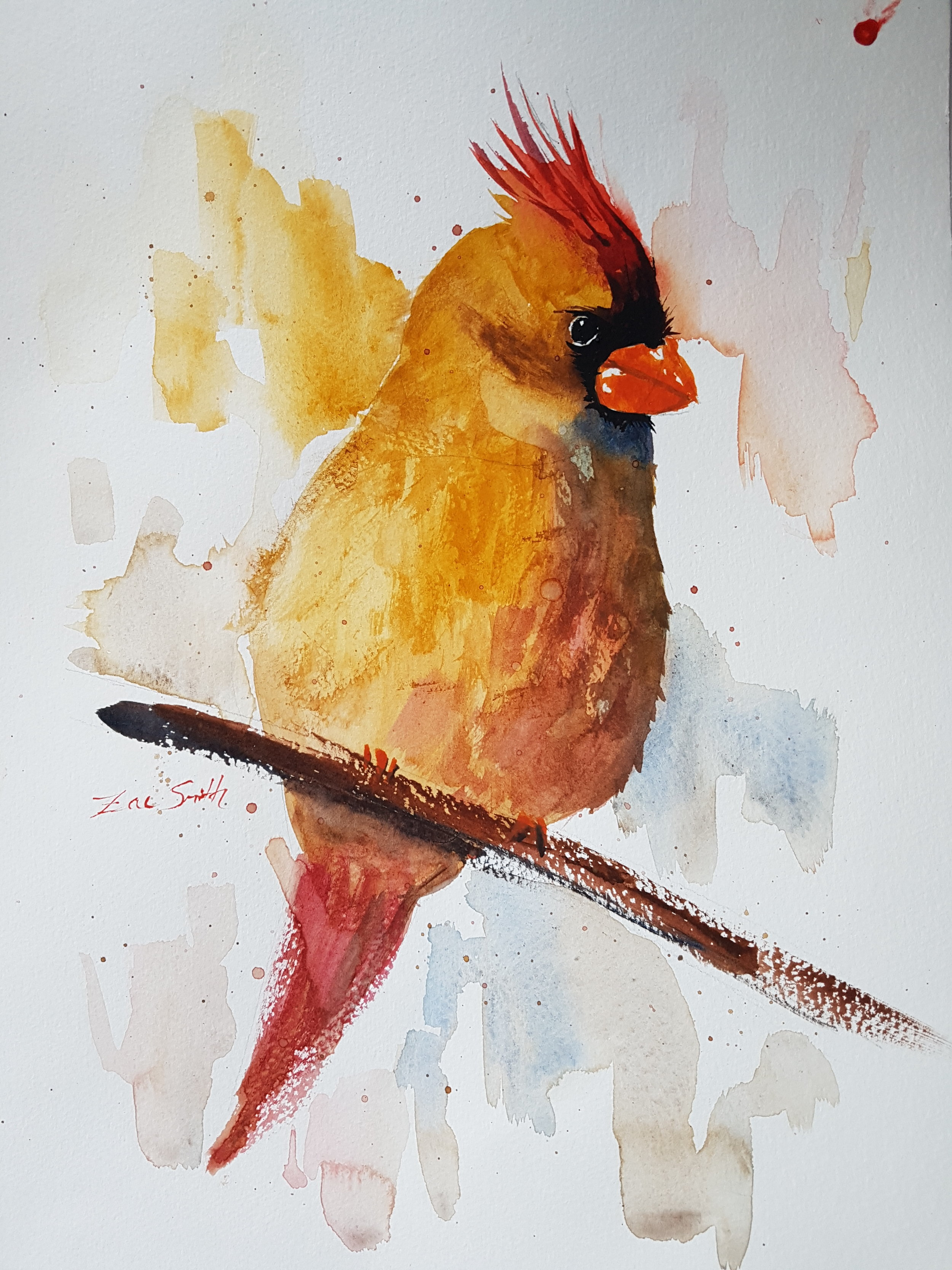 """""""Hobson's Cardinal"""" 14x11.5""""  Aside Nitin's Cardinal, I painted this one from an instructional video by Ken Hobson ( YouTube link ) ( website link ). It was a great exercise to see how two different artists approached the same subject."""