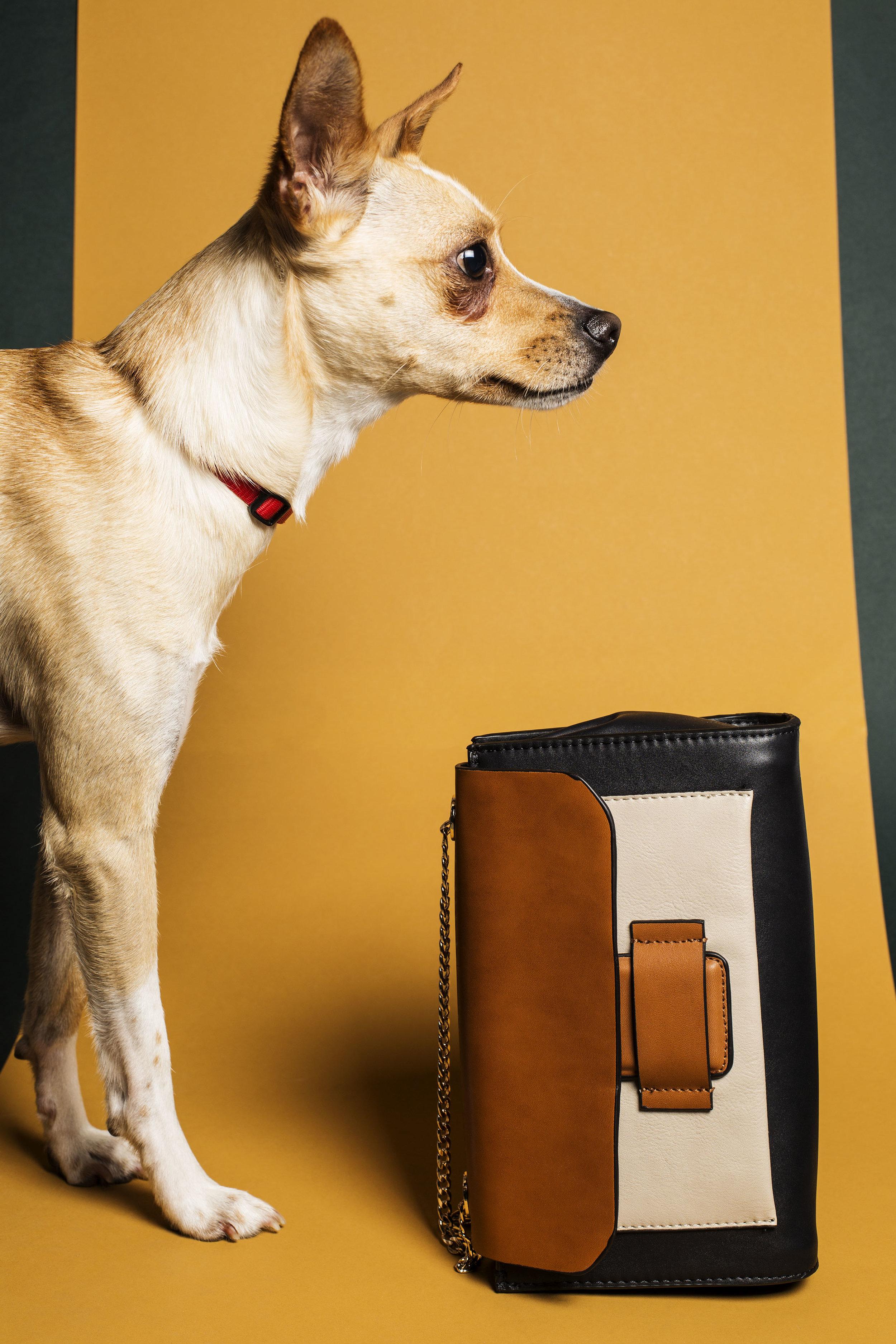 WEB_Fashion_Dog_X1A8531 (1).jpg
