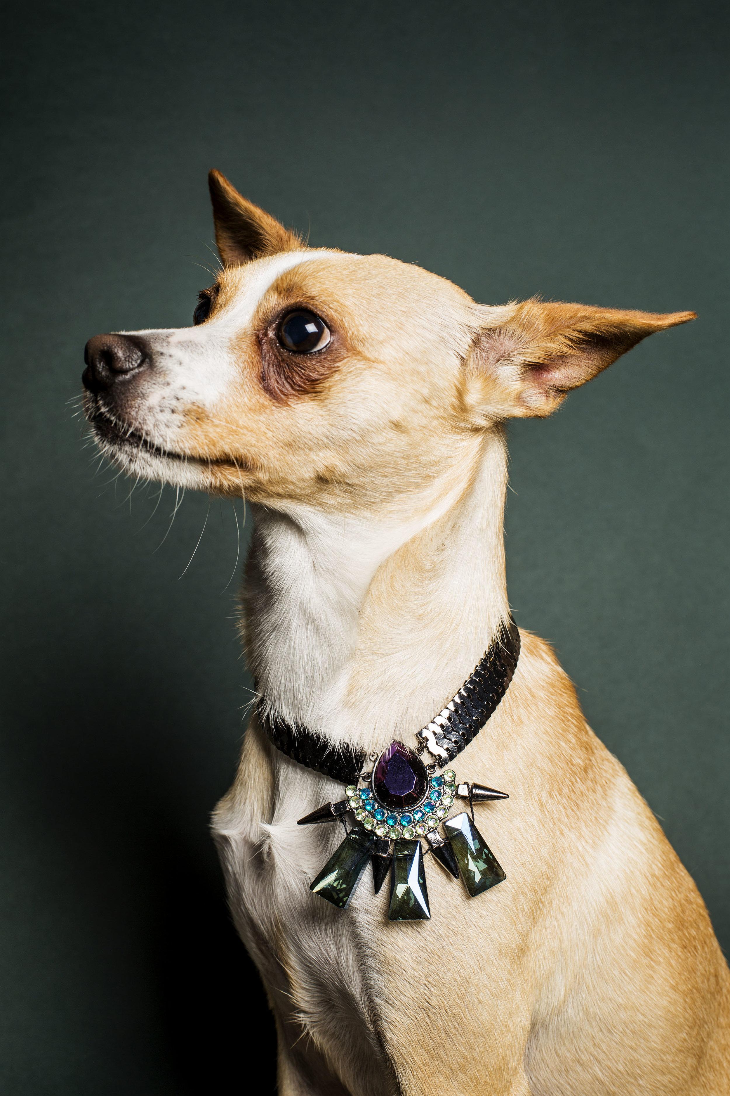 WEB_Fashion_Dog_X1A8540 (1).jpg