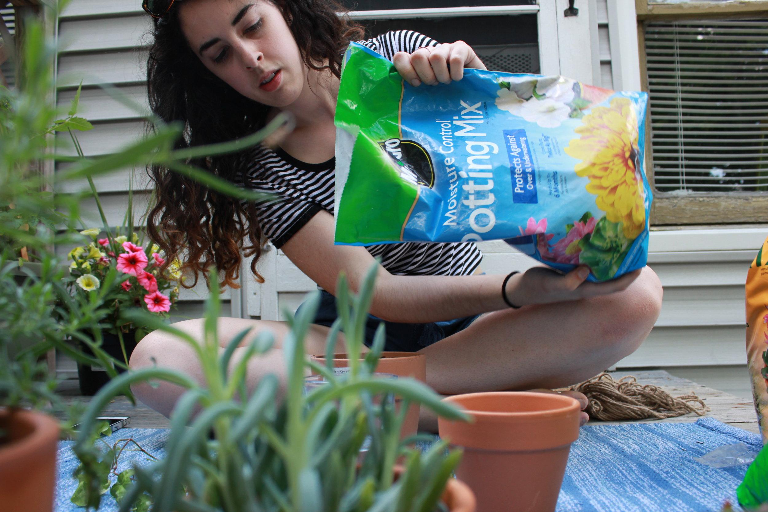 plants in pots on the deck (2).JPG