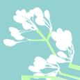 blossom-avatar-charmingfolk.png