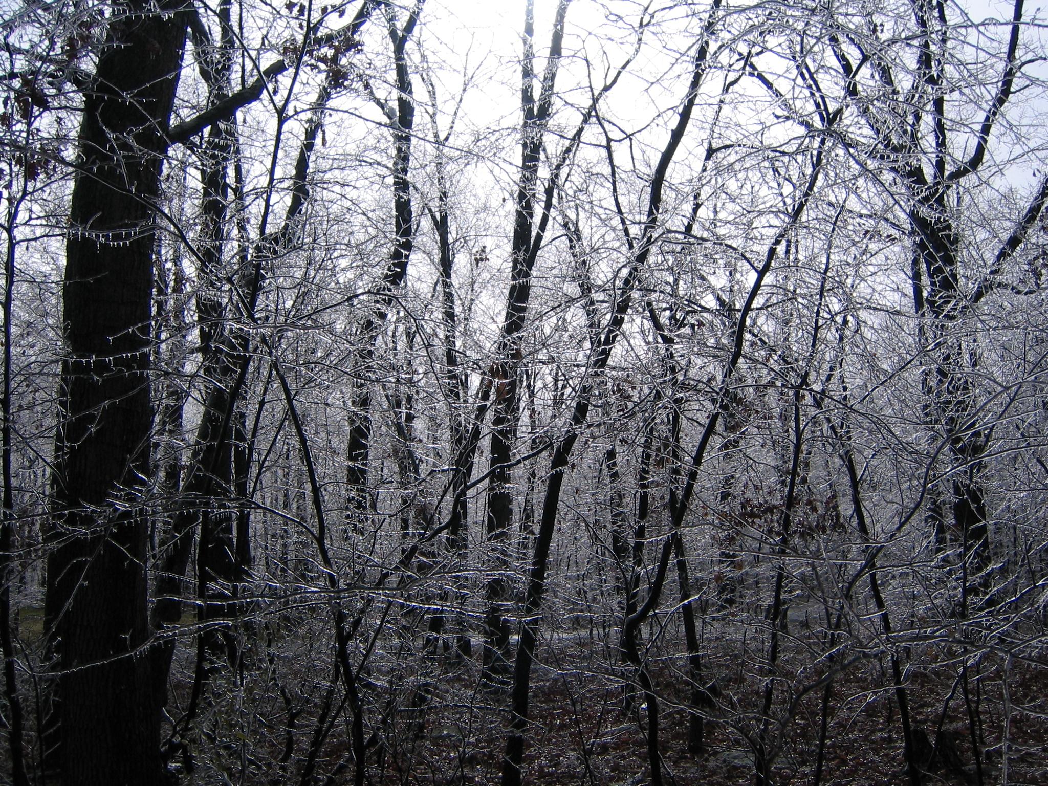 Ice Storm Winchester, VA