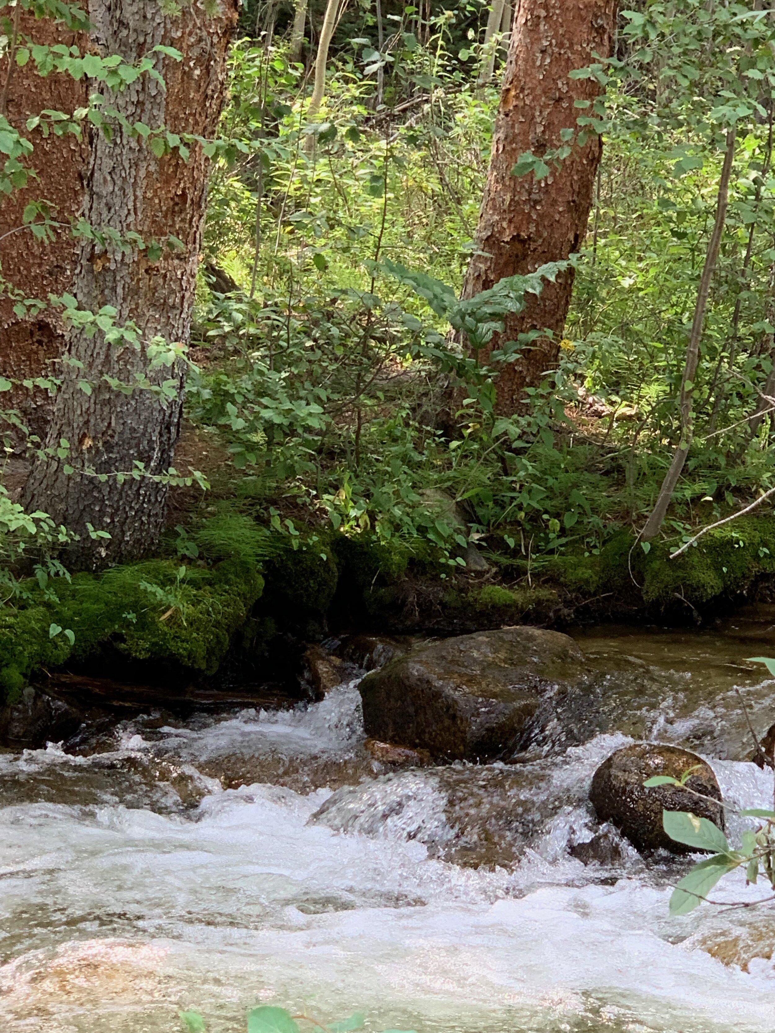 Little Stream2.jpeg
