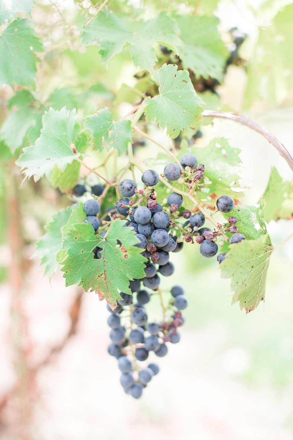Hopewell-Valley-Vineyards-Wedding_04.jpg