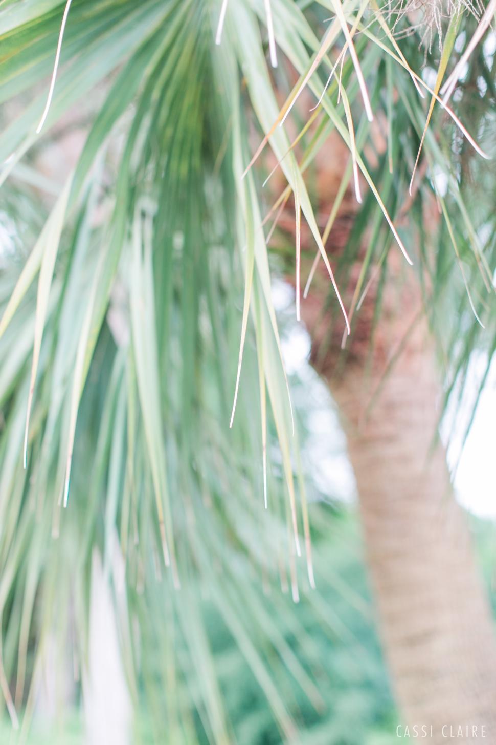 Mansion-at-Tuckahoe-Wedding-Jensen-Beach-Florida_024.jpg