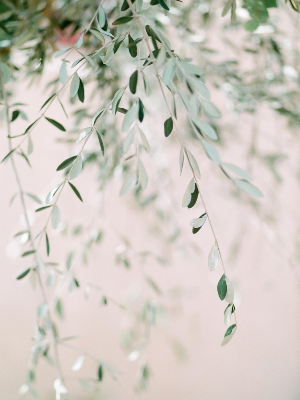 Tuscany-Destination-Wedding-Photographer-Cassi-Claire-Borgo-Petrognano-Florence-Wedding-23.jpg
