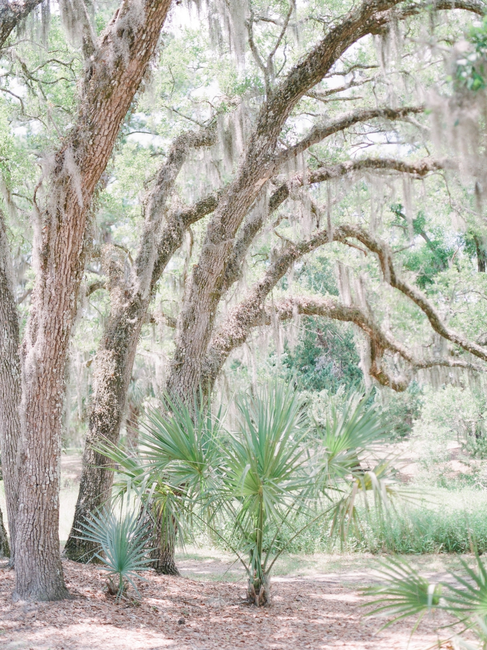 Cypress-Trees-Plantation-Wedding-Charleston-SC-Edisto-Island-Wedding_43.jpg