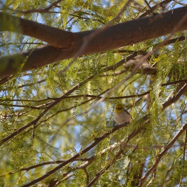 SRP will give qualifying households two free desert trade trees but this is a short-time offer, so sign up immediately.