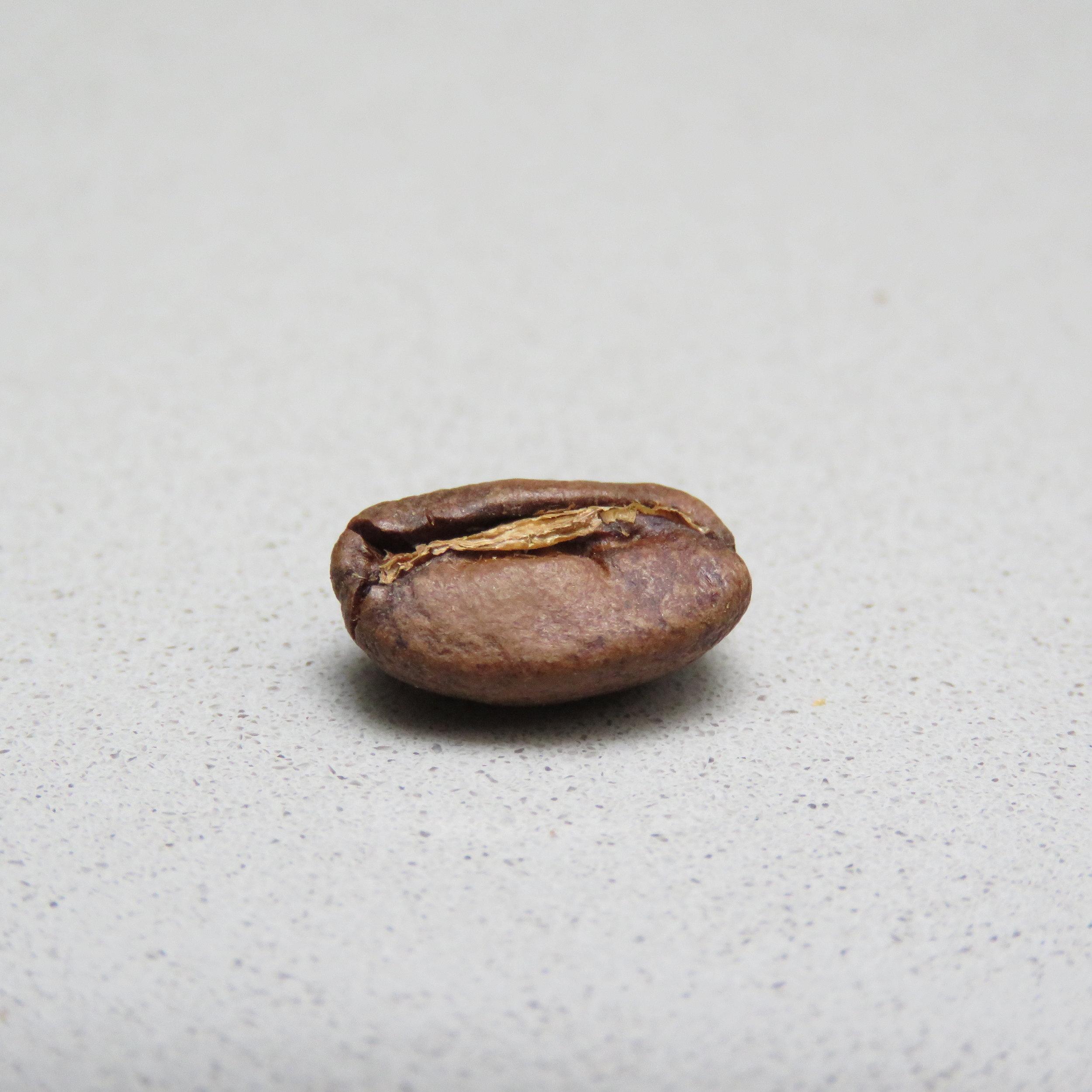 Cafeología Tostado y Catación