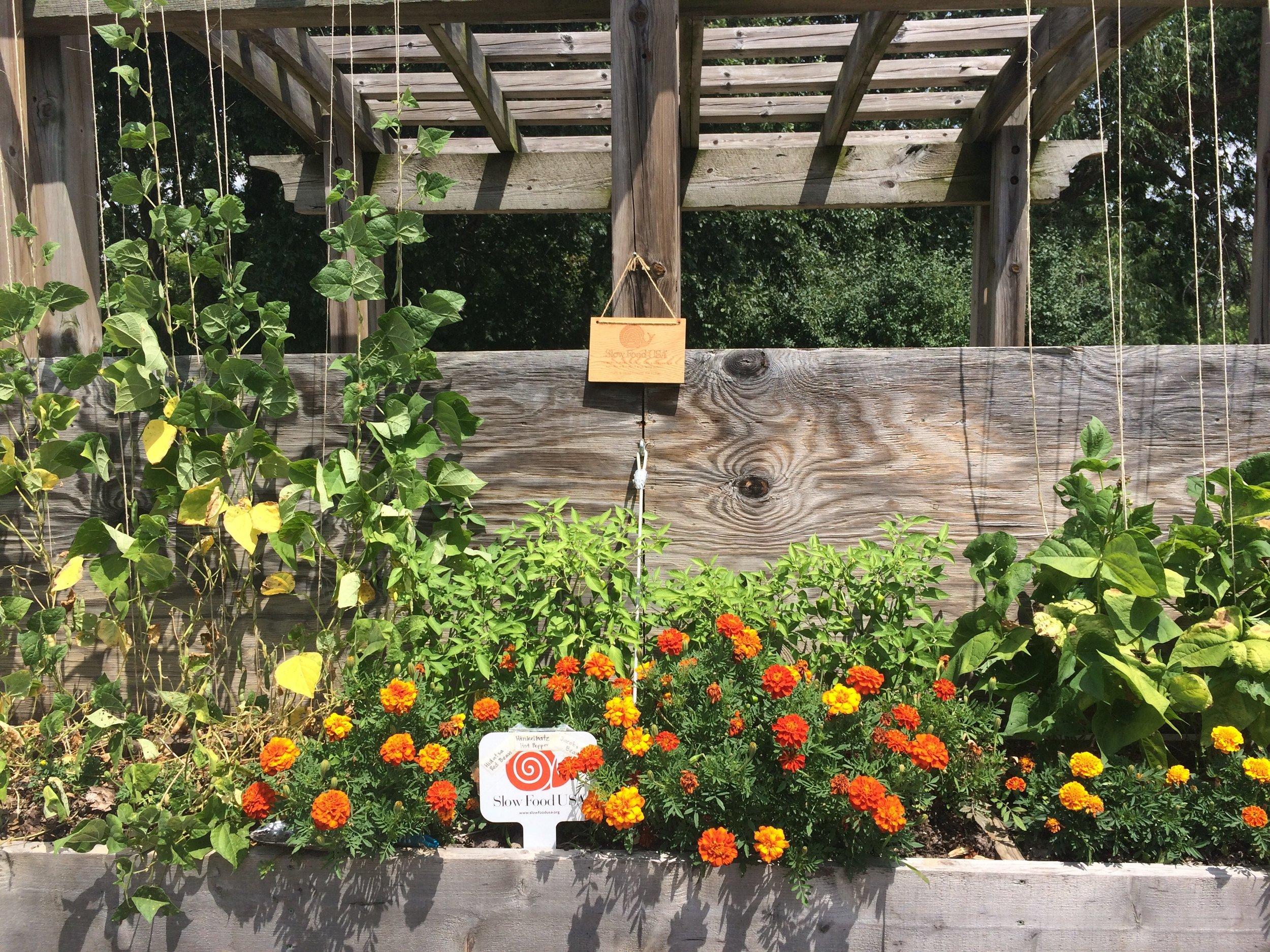 Ark of Taste garden at County Farm Park