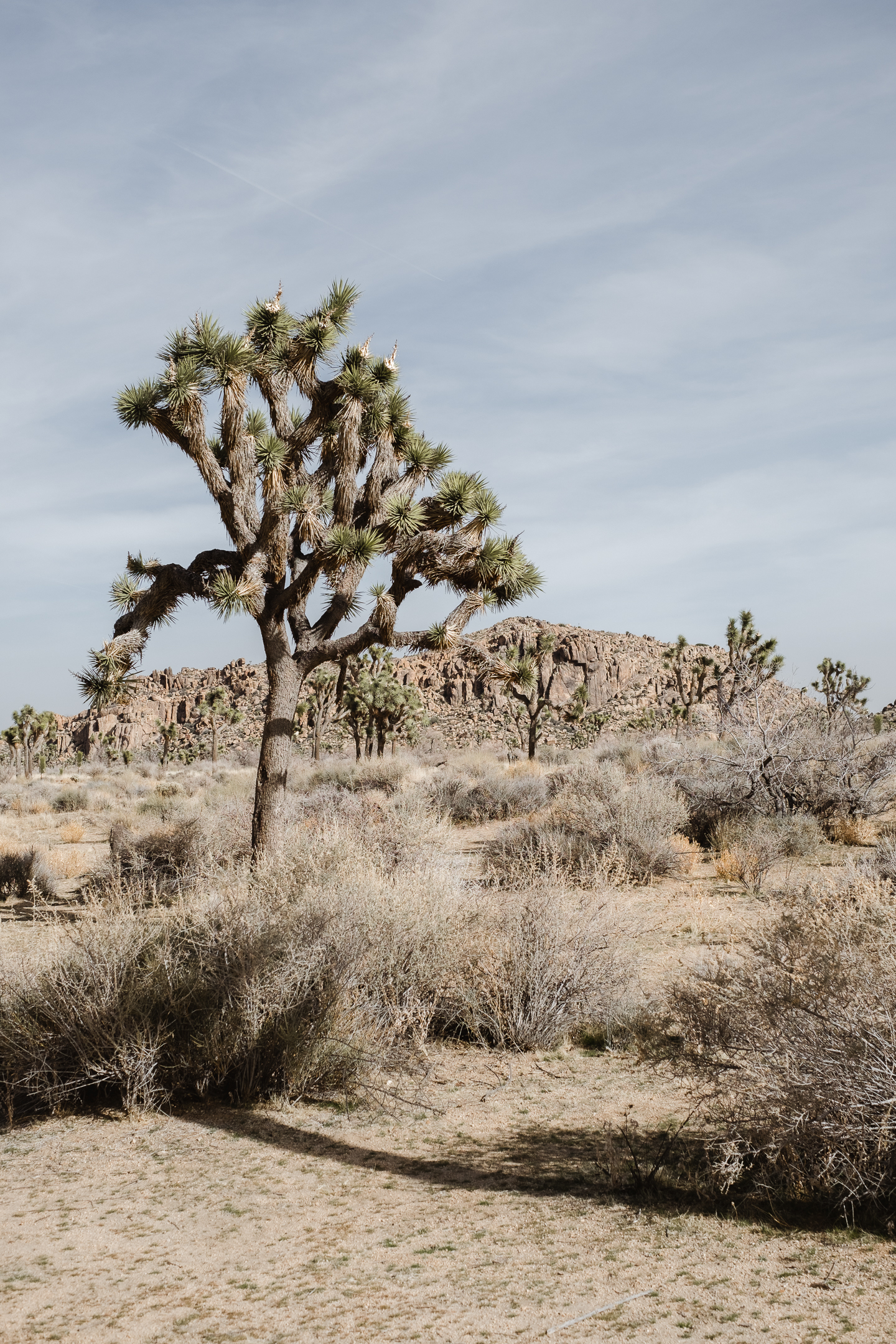 Joshua tree (53 of 53).jpg