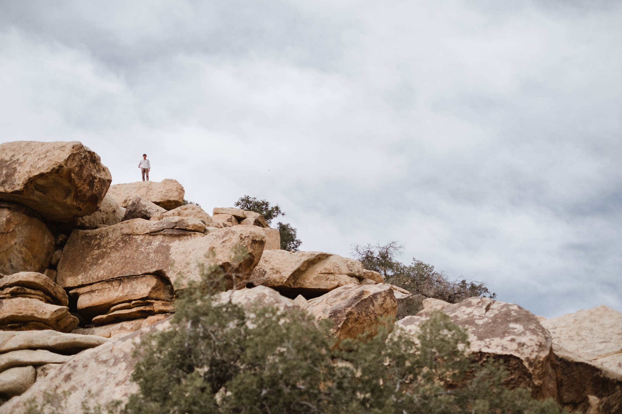 Joshua tree (20 of 53).jpg