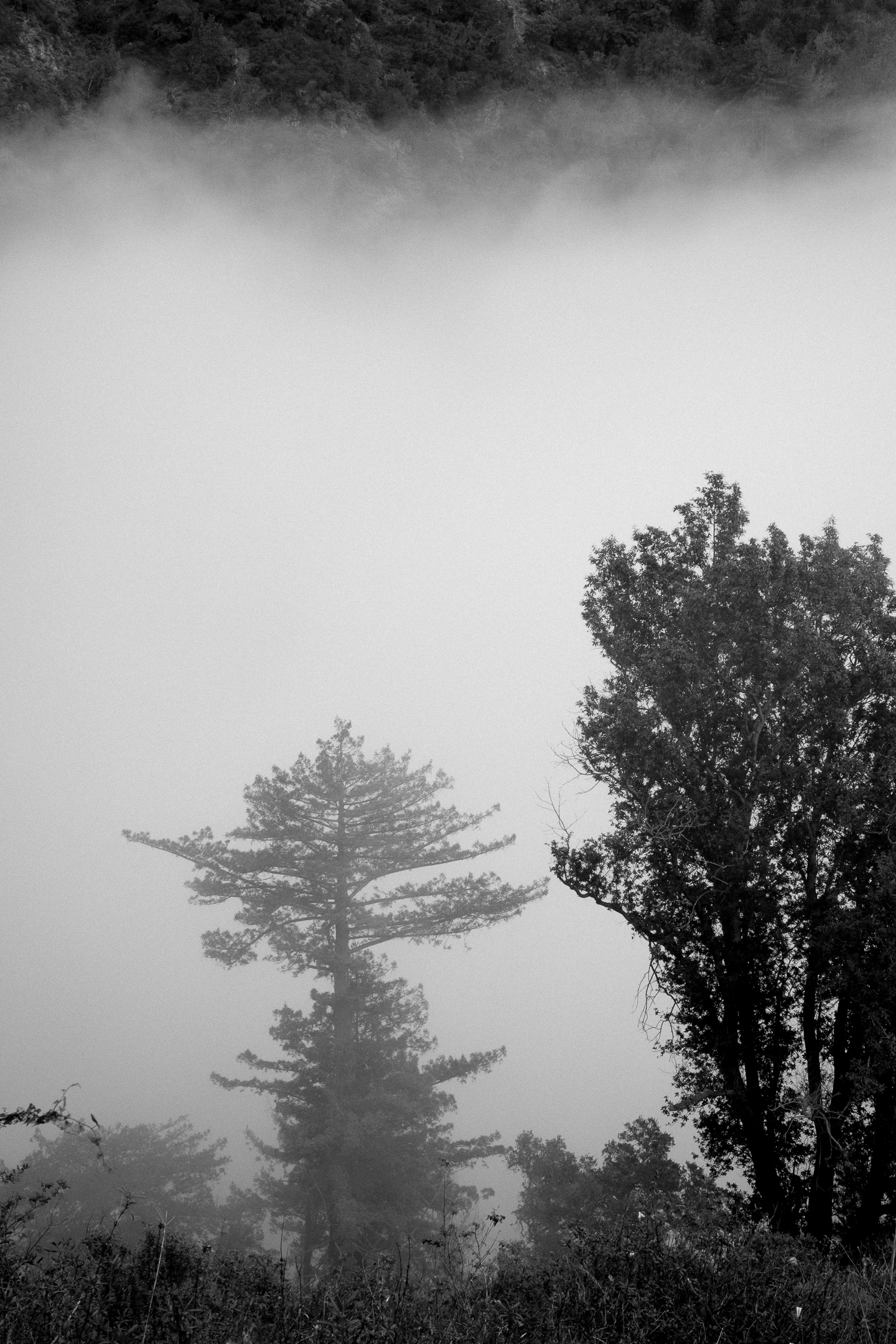 bigsur (35 of 40).jpg