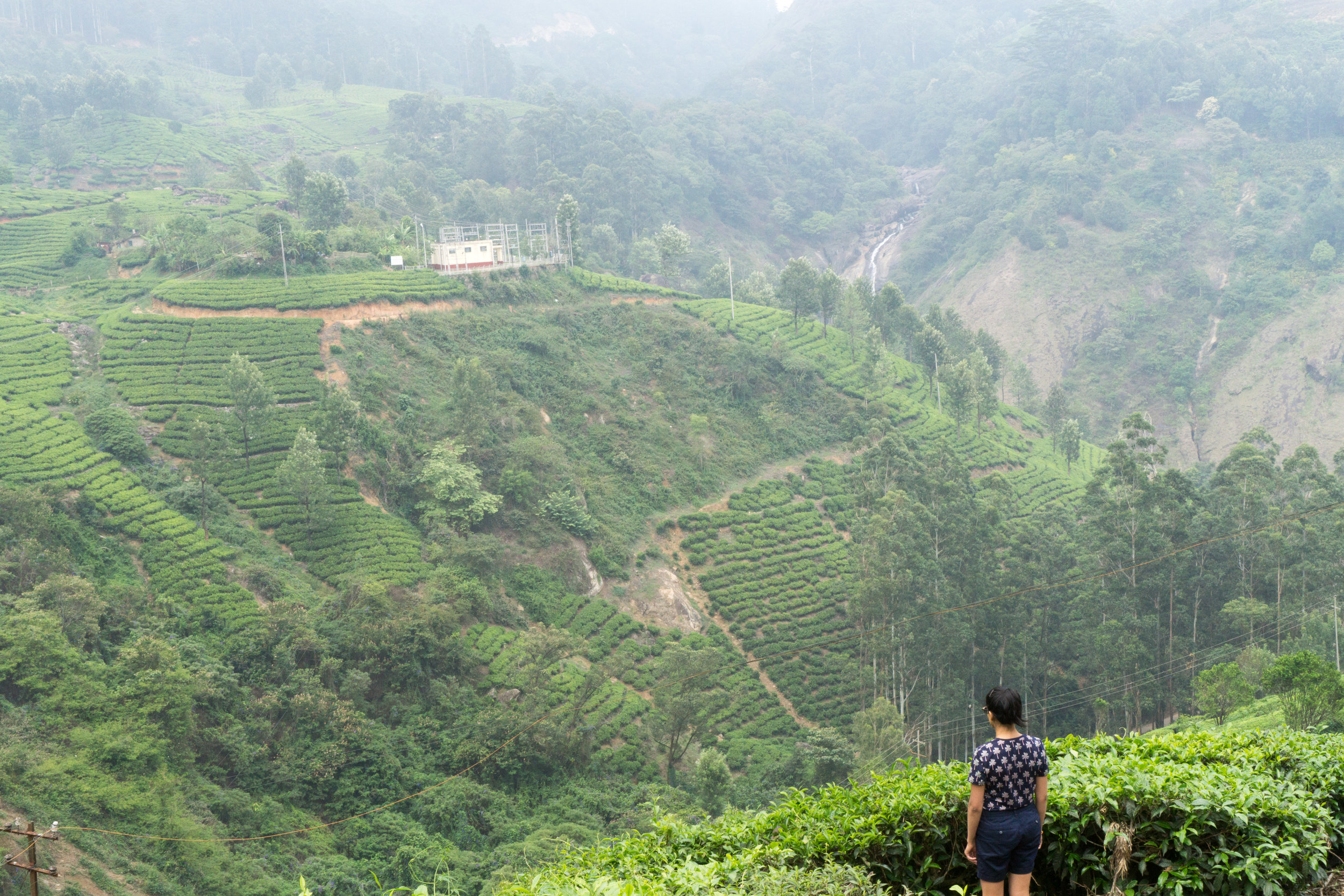 Hiking around the tea plantations of Munnar