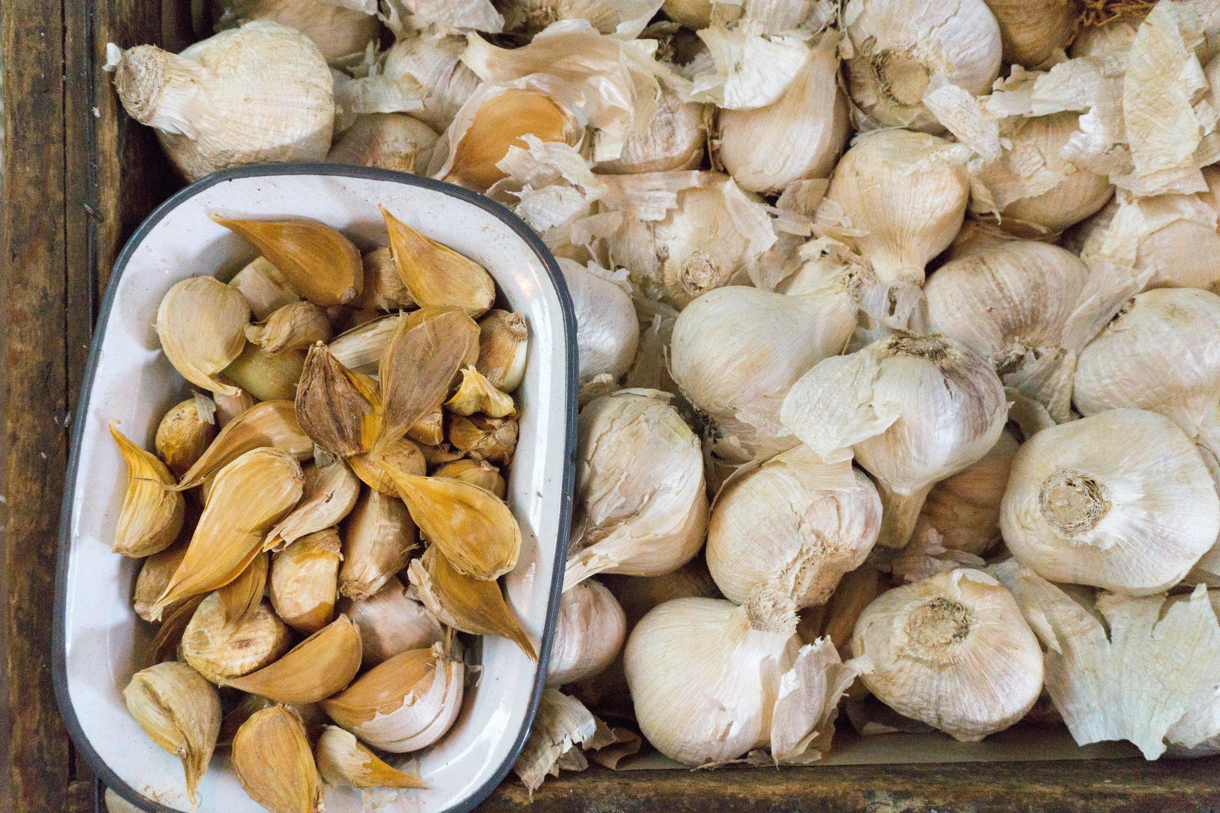 Fresh garlic from the farm