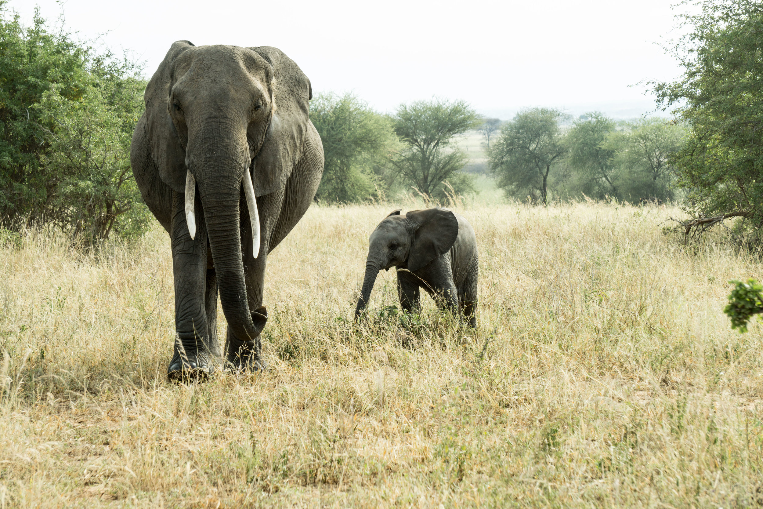 Elephant and his little guy.