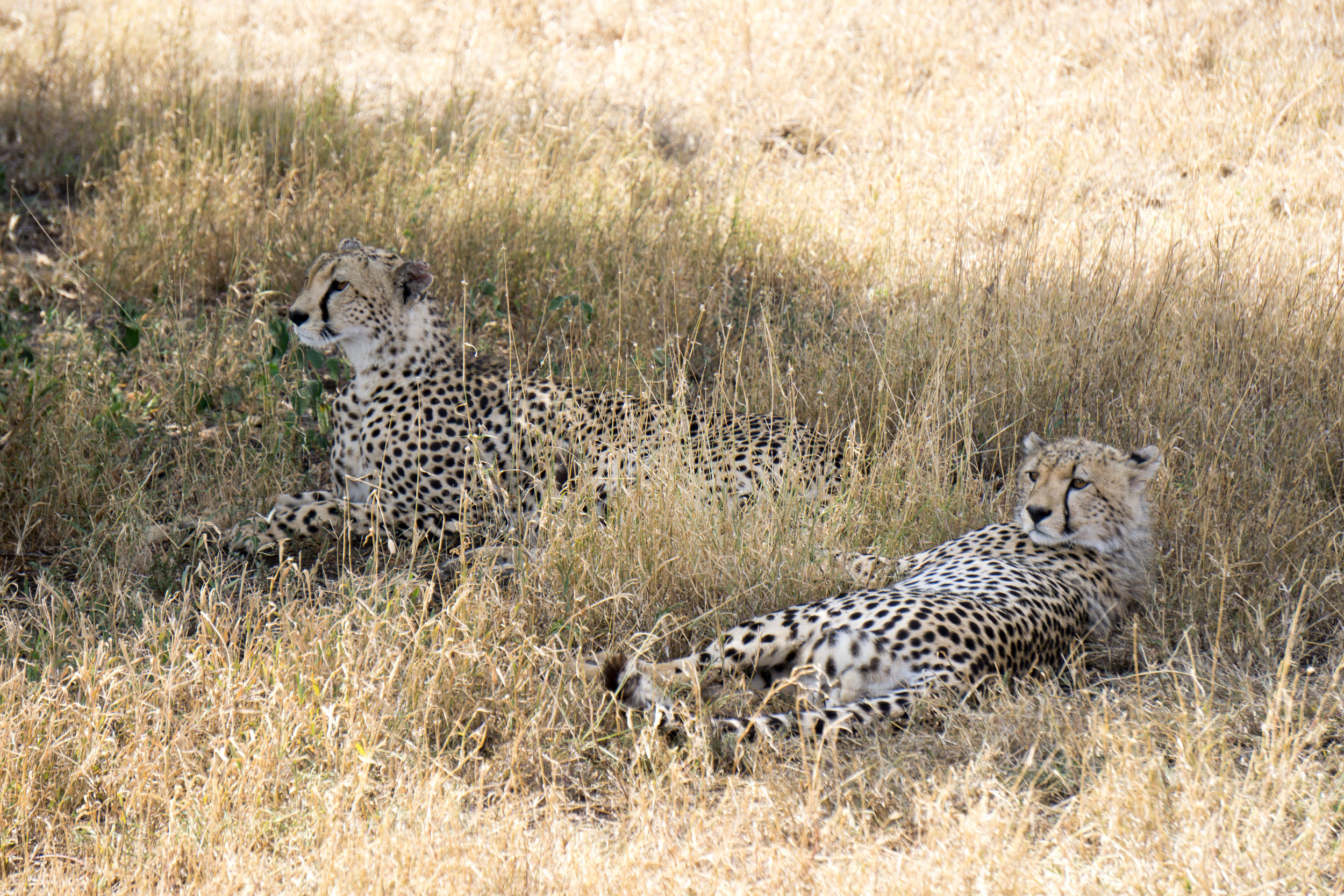 First, and only Leopard sighting.