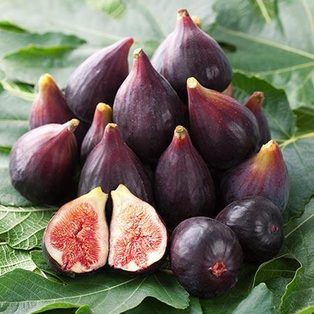 Fig Anti-ageing properties.jpg
