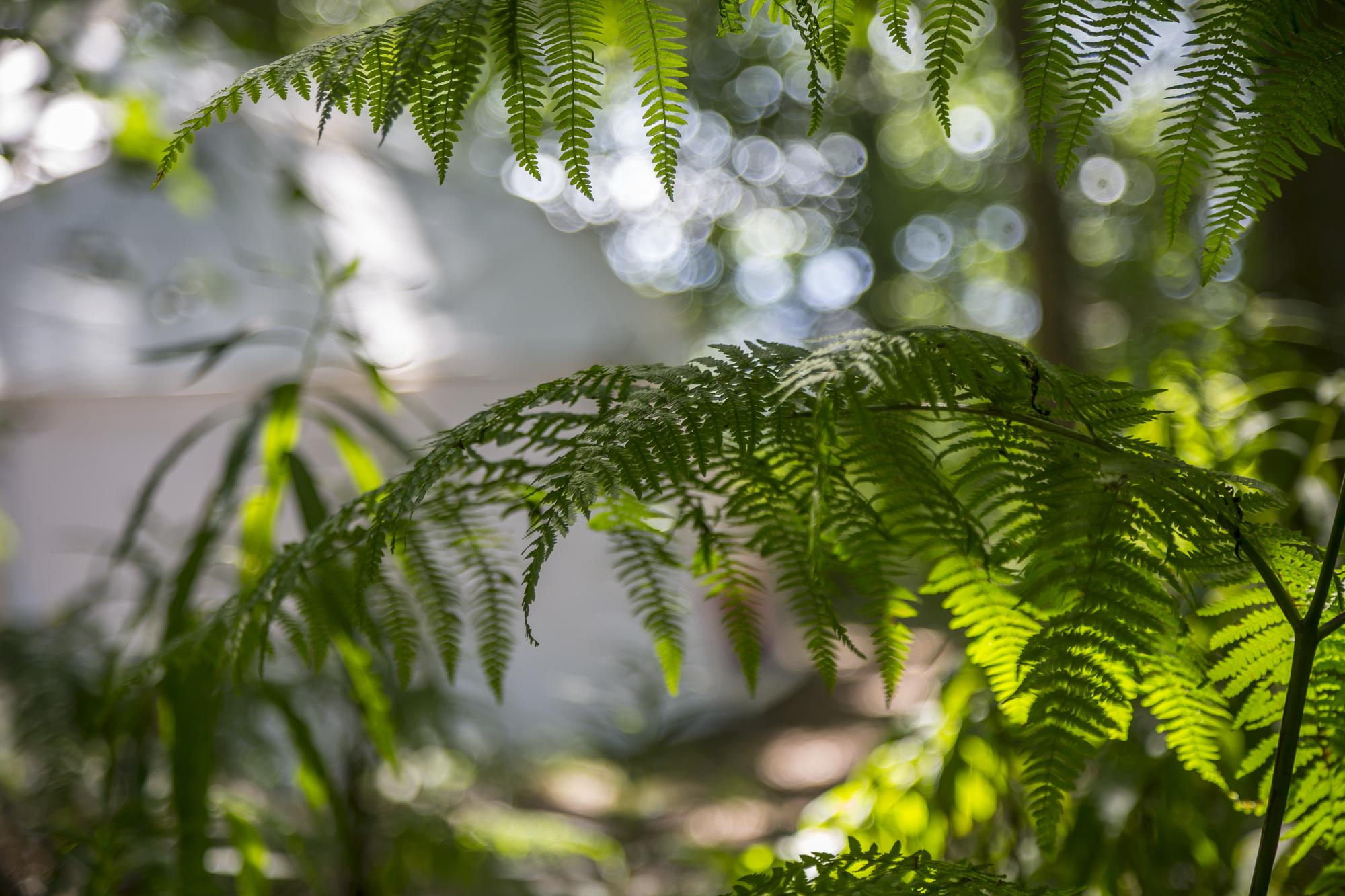 Lovely ferns.jpg