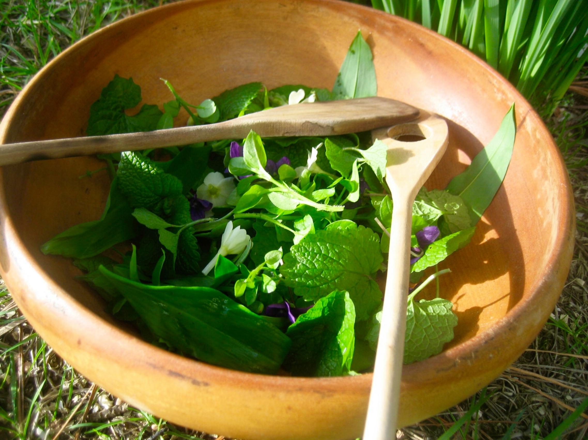 Forest Spa wild bowl salad.jpg