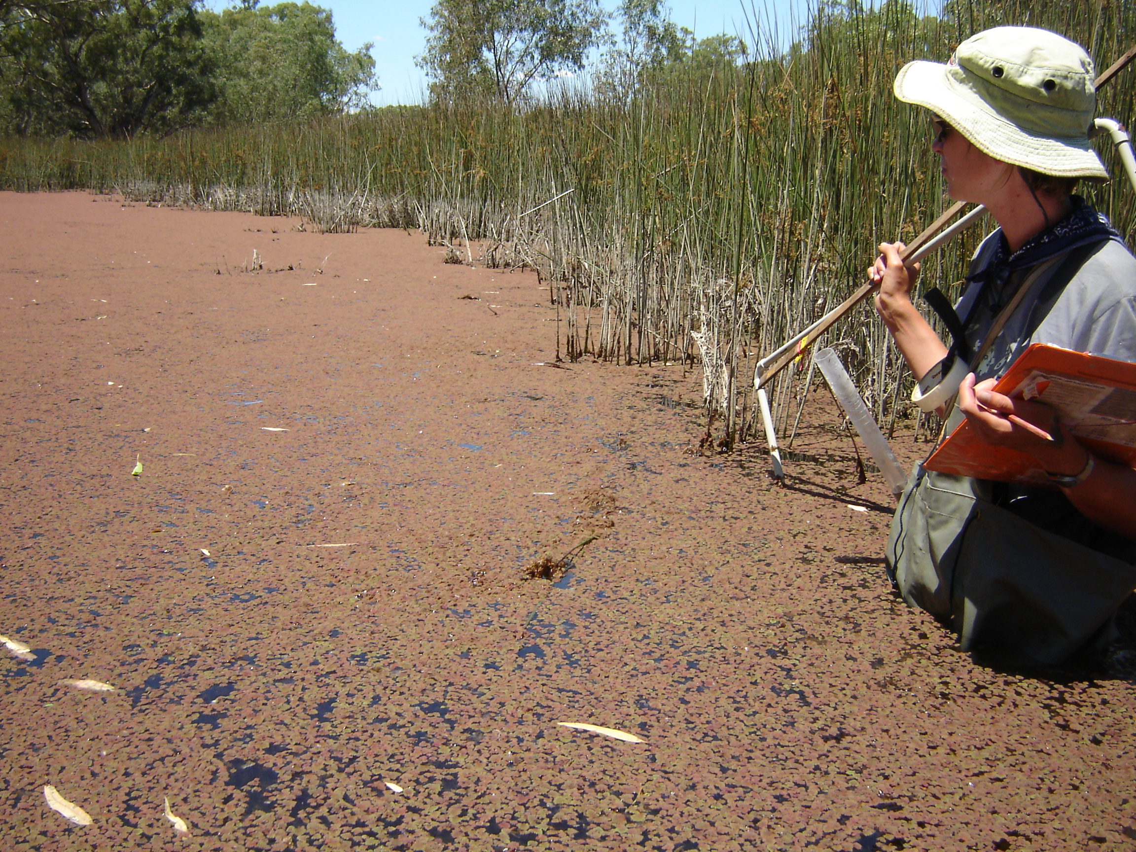 Management of Wetlands, Lakes & Estuaries - Current and Completed Projects