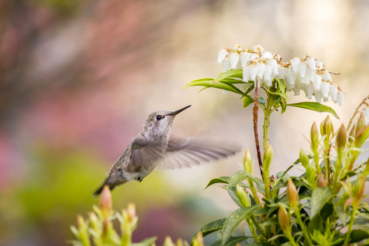 CUB_Zapata-Peninsula-©-Adobe-Stock-SmallbirdBee-Hummingbird.jpg