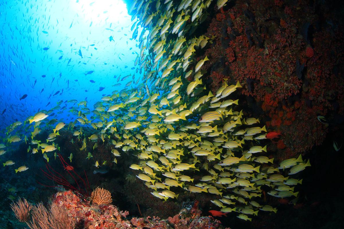 MLV_Mirihi-©-Mirihi-Island-Resort_97a1654_15xT9MN.jpg
