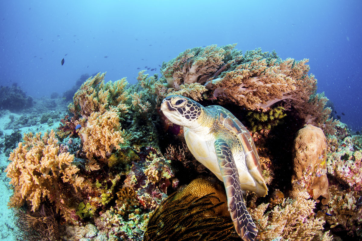 MYS_Borneo-Turtle-Reef-©-Adobe-Stock_109314775.jpg