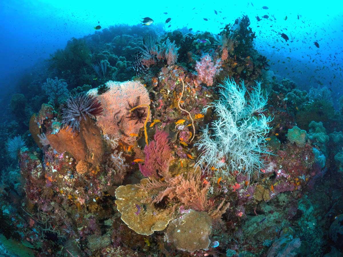 PNG_Tawali-UW-Reef-©-Tawali-Resort-P5022246_e.jpg