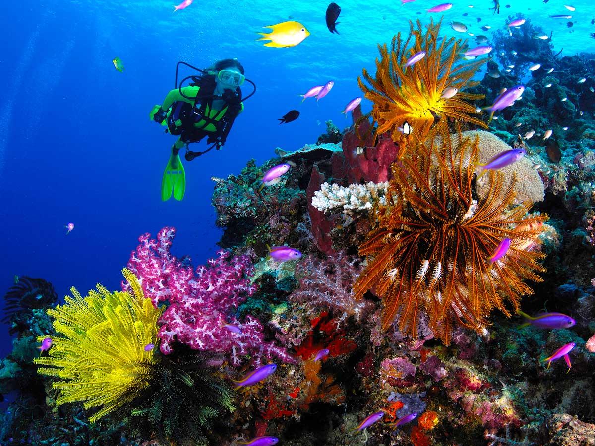 PNG_Walindi-Resort-UW-©-Walindi-Resort-CMARCE4.jpg