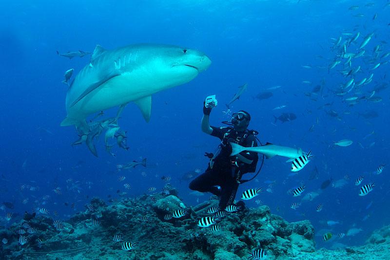 FJI_Beqa-UW-Shark-Dive-©-Thomas-Baechtold-011.jpg