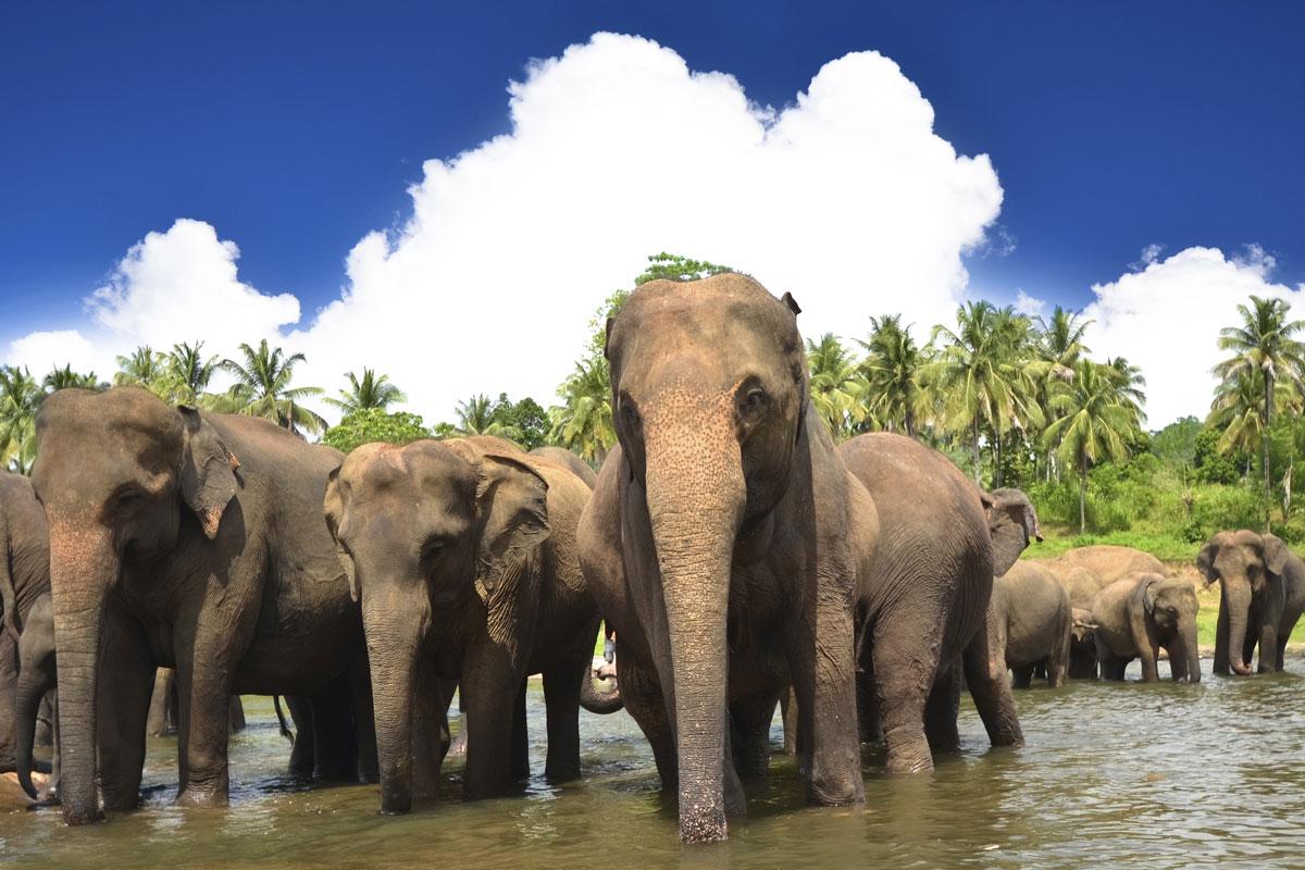 LKA_Elephant-herd-©-Sri-Lanka-Instyle-2.jpg