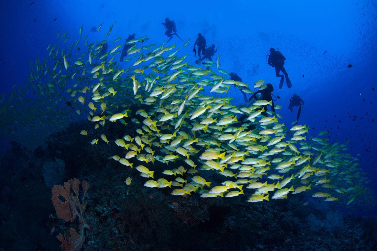 MDV_Maldives-UW-South-Ari-Atoll-©16-Thomas-Baechtold-0071.jpg