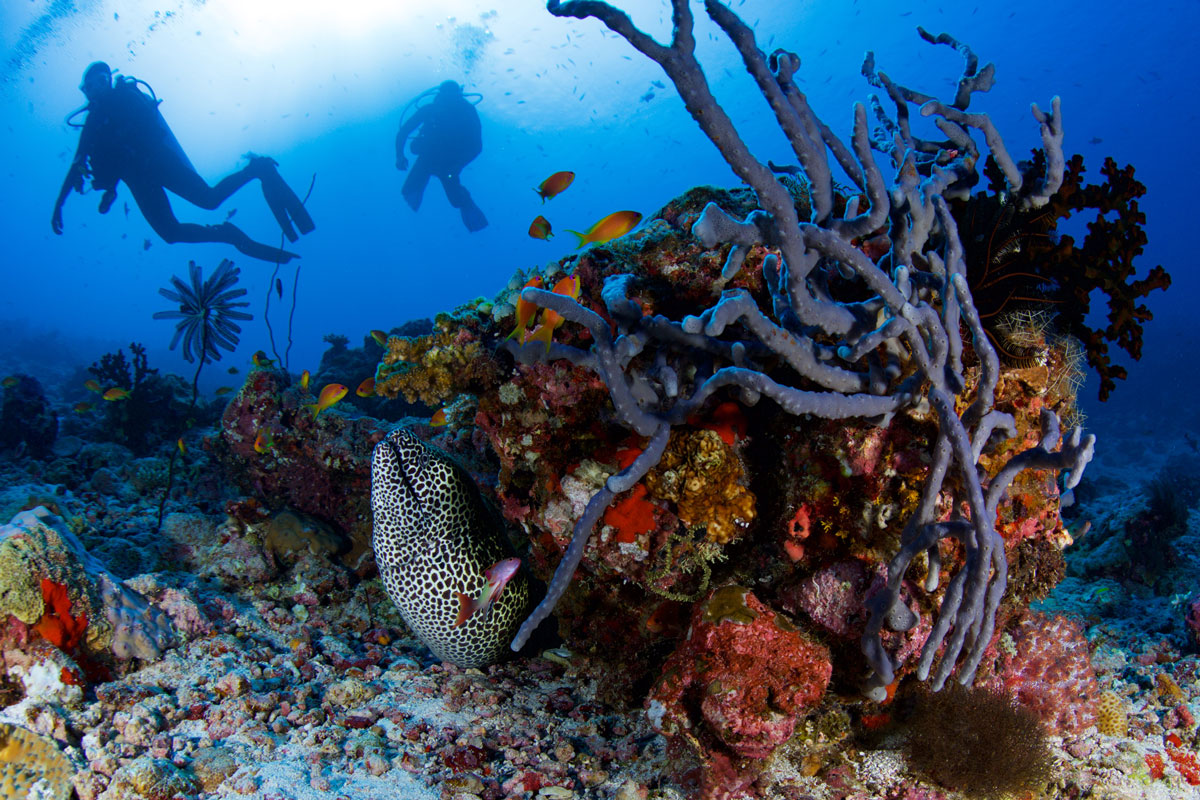 MDV_Maldives-UW-South-Ari-Atoll-©16-Thomas-Baechtold-0072.jpg
