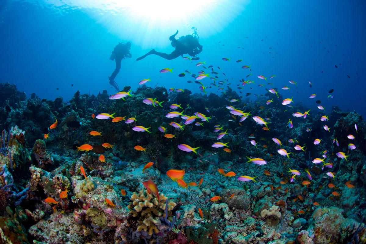 MDV_Maldives-UW-South-Ari-Atoll-©16-Thomas-Baechtold-0576.jpg