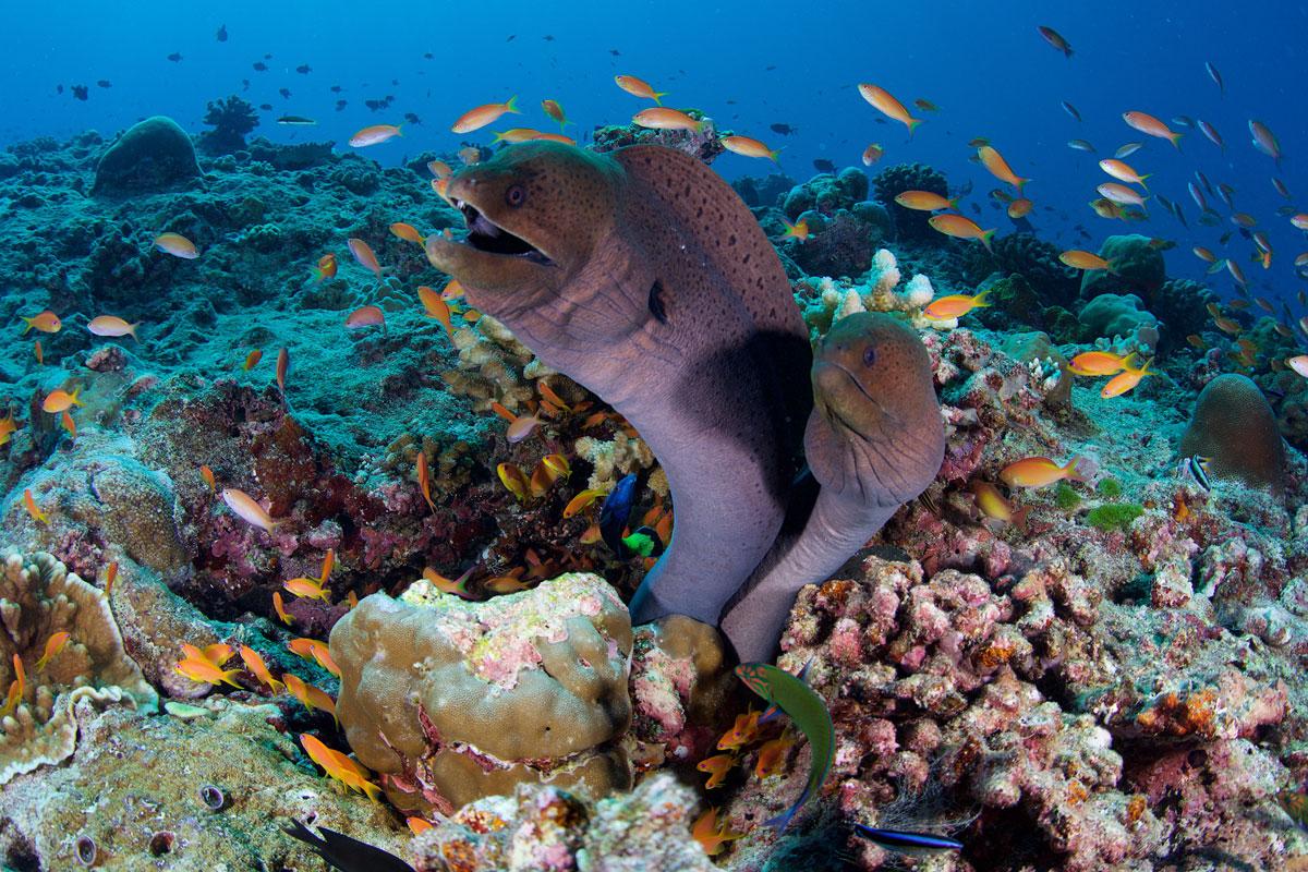 MDV_Mirihi-Island-Resort-UW-House-Reef-©-Thomas-Baechtold-0513.jpg