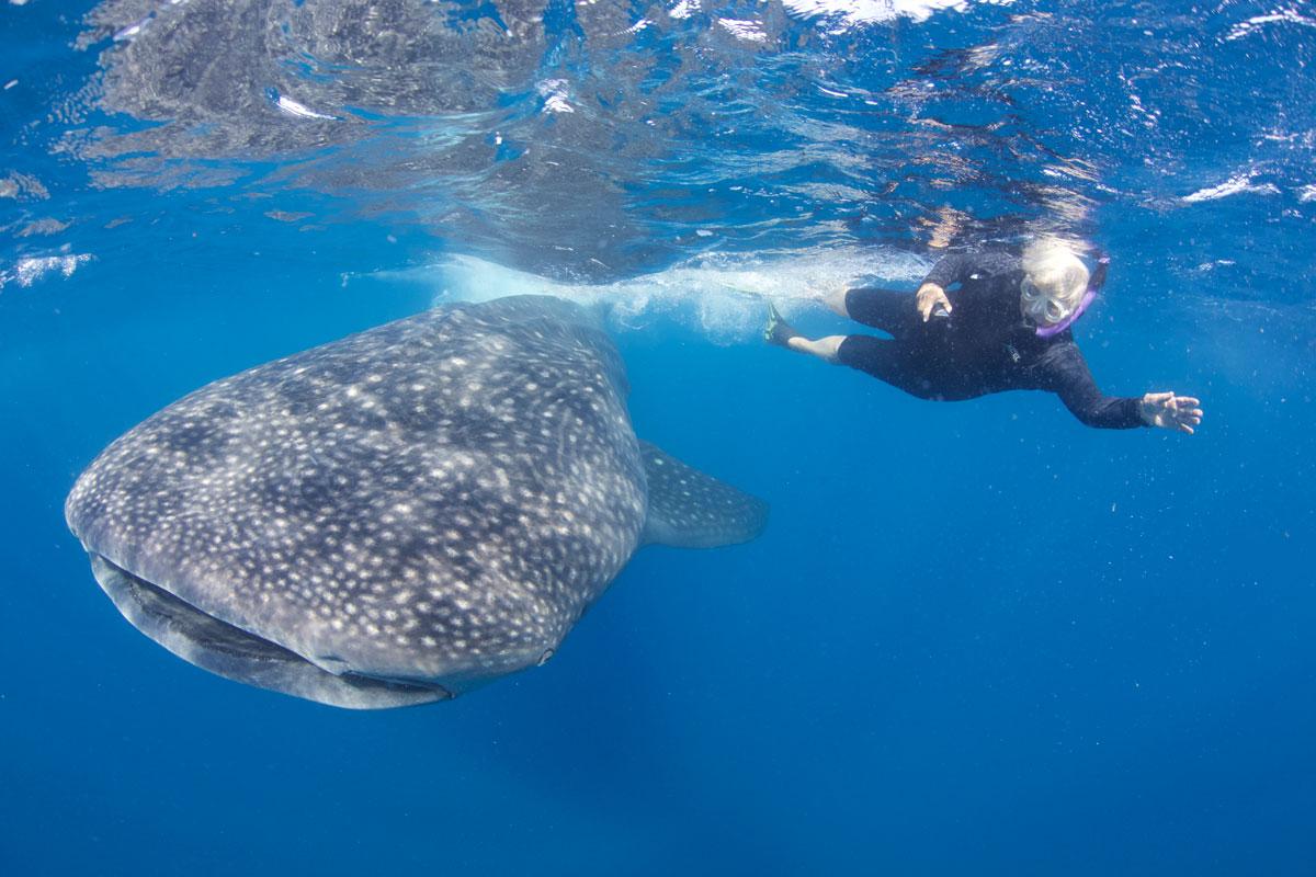 MLV_Maldives-whale-shark-©13-Thomas-Baechtold-525.jpg
