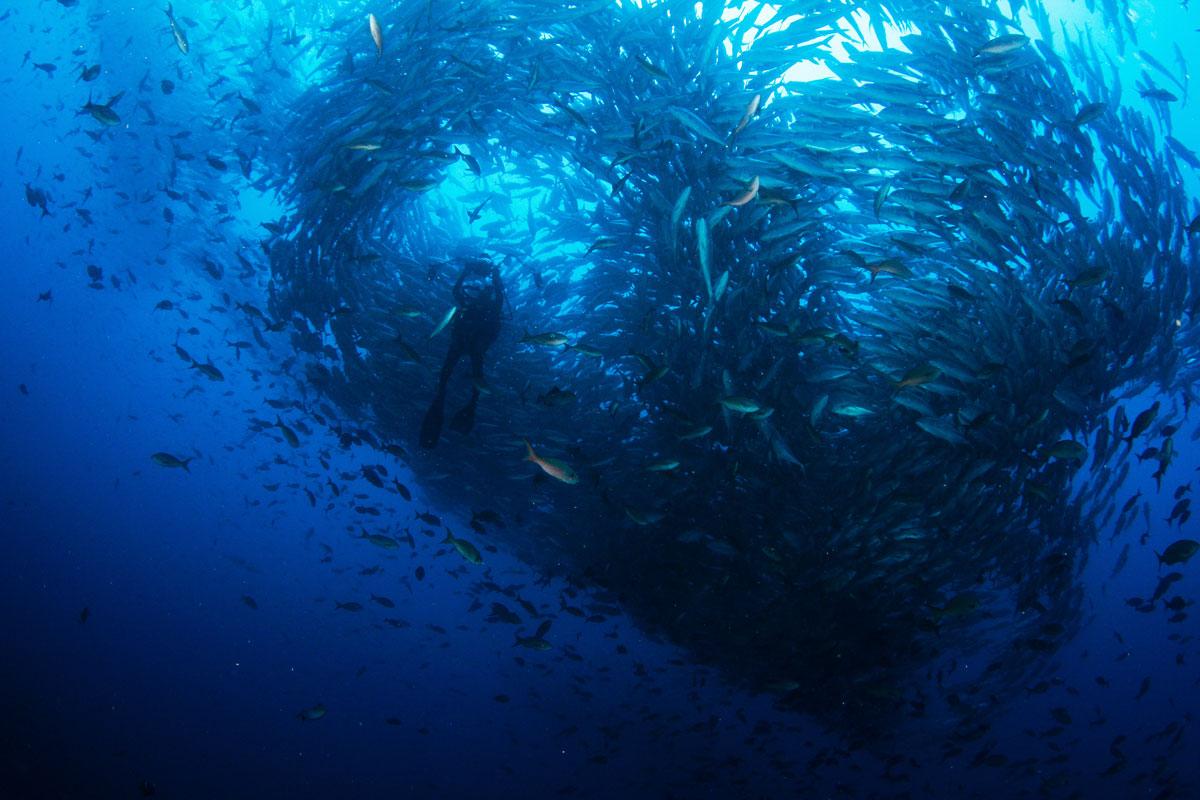 CRI_Cocos-Island-Underwater-©-Avi-Klapfer-21.jpg
