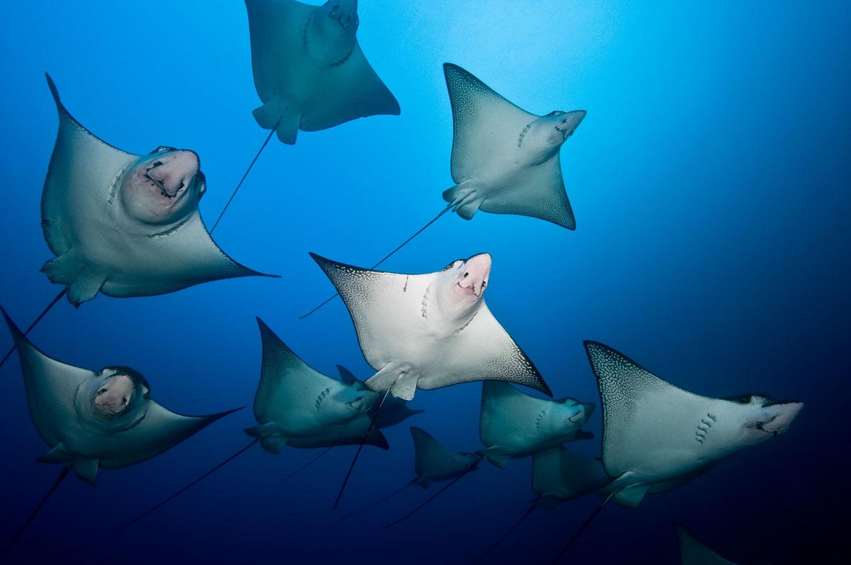 CRI_Cocos-Island-Underwater-©-Manuelita-Herreno-14.jpg