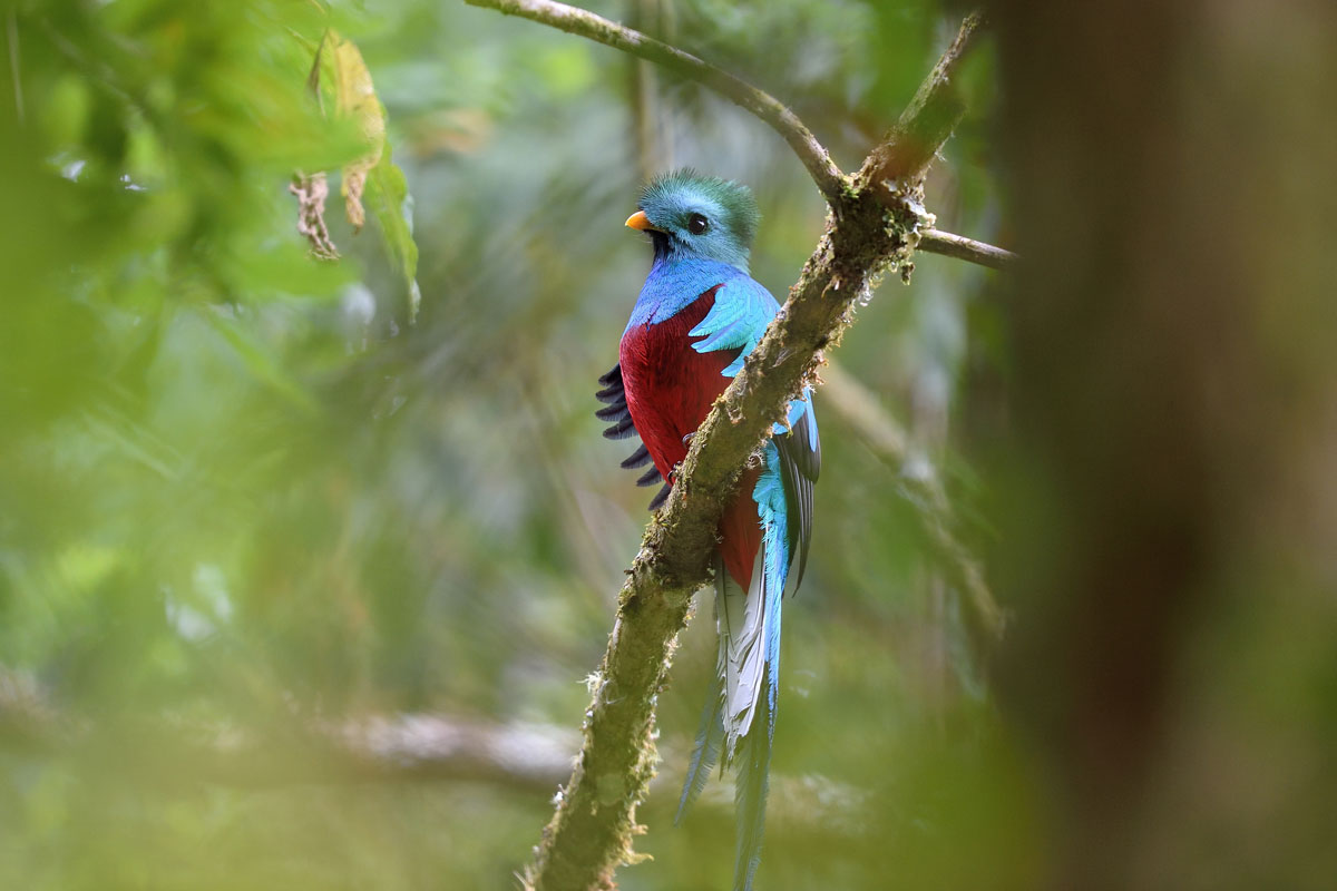 CRI_Costa-Rica-Resplendent-Quetzal-©-Adobe-Stock.jpg